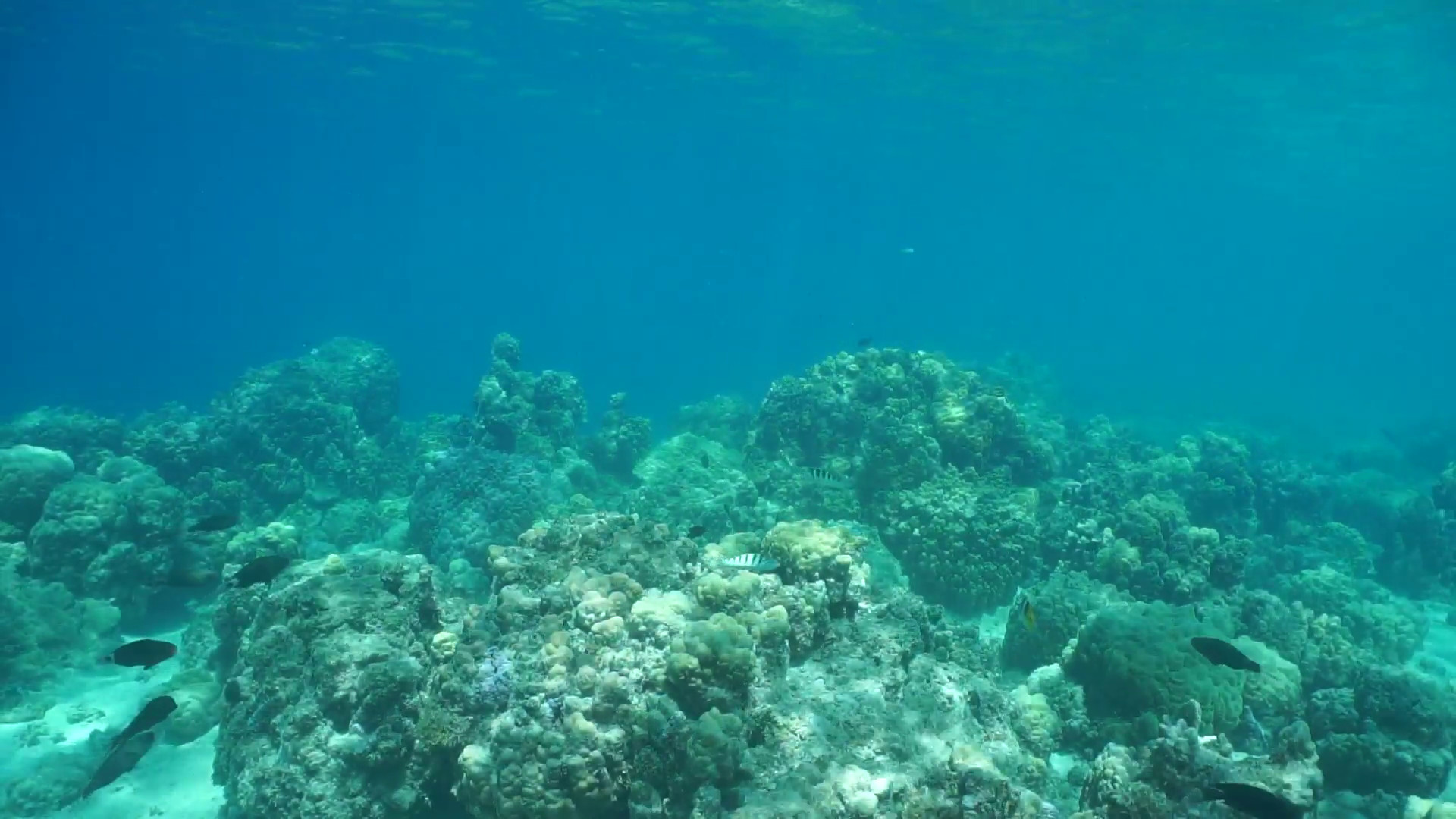 Underwater landscape, stony coral reef on the ocean floor with tropical  fish, lagoon of Huahine island, Pacific ocean, French Polynesia Stock Video  Footage …