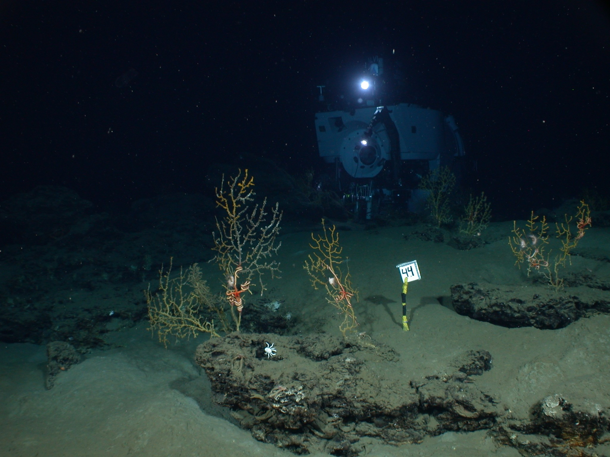 Deep submergence vehicle, Alvin, shown underwater, with sea creatures in  the foreground.