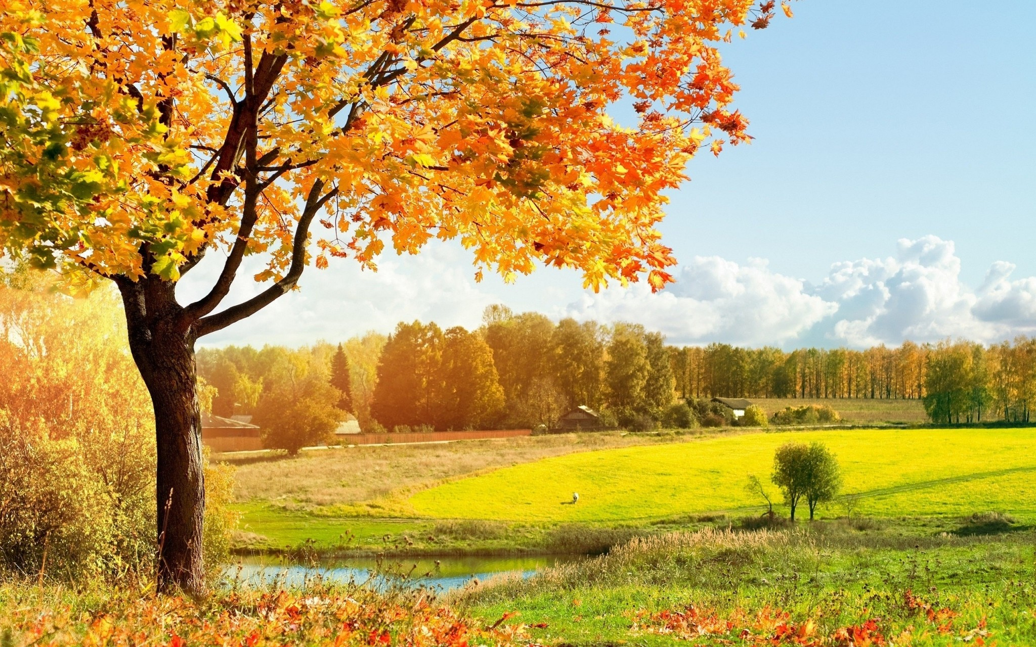 fall screensavers and backgrounds free