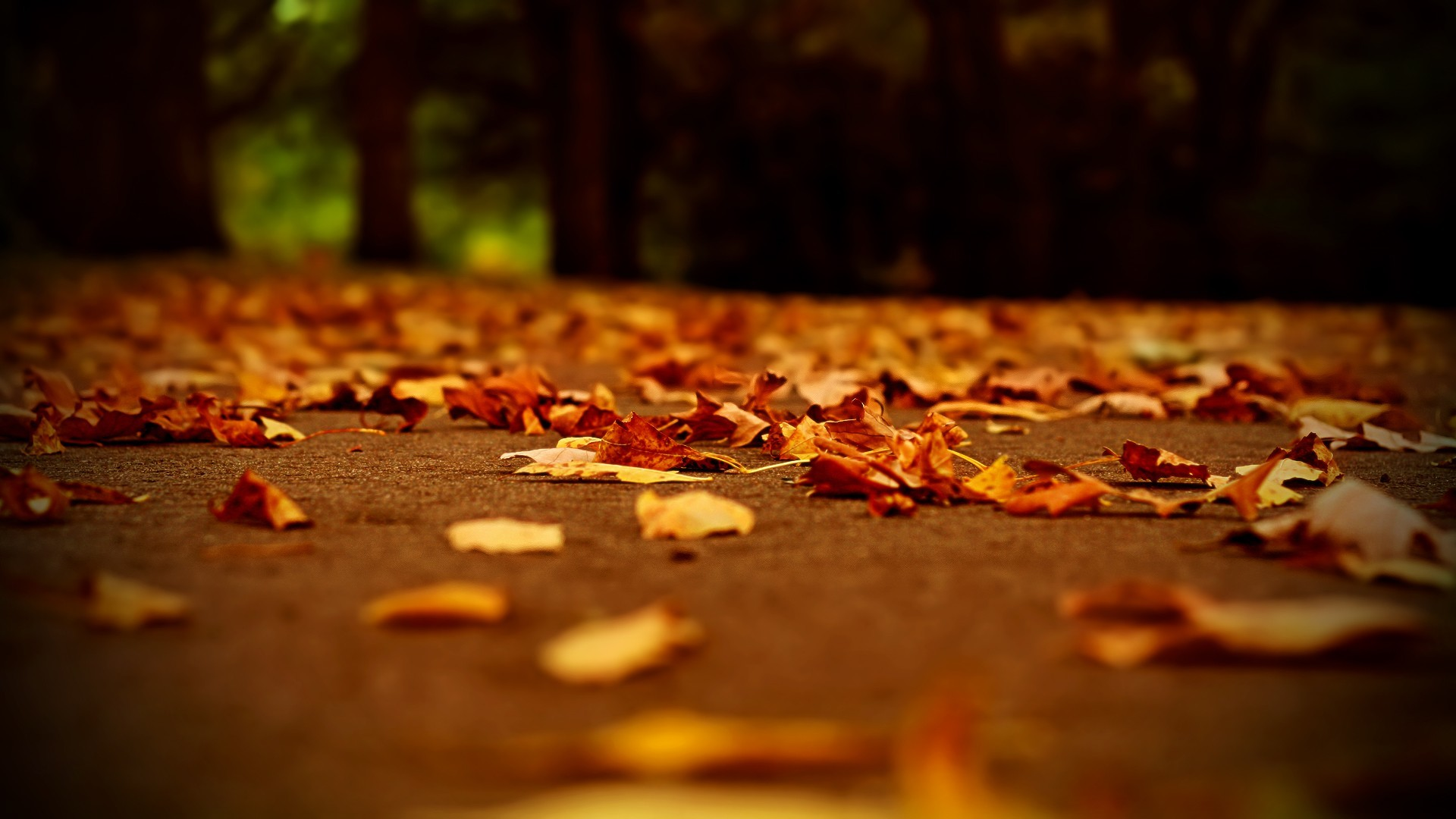 Find this Pin and more on Beauty. autumn leaves depth of field fallen  leaves wallpaper