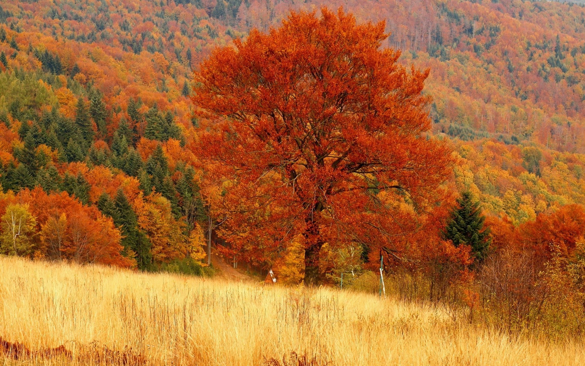 free wallpaper and screensavers for fall