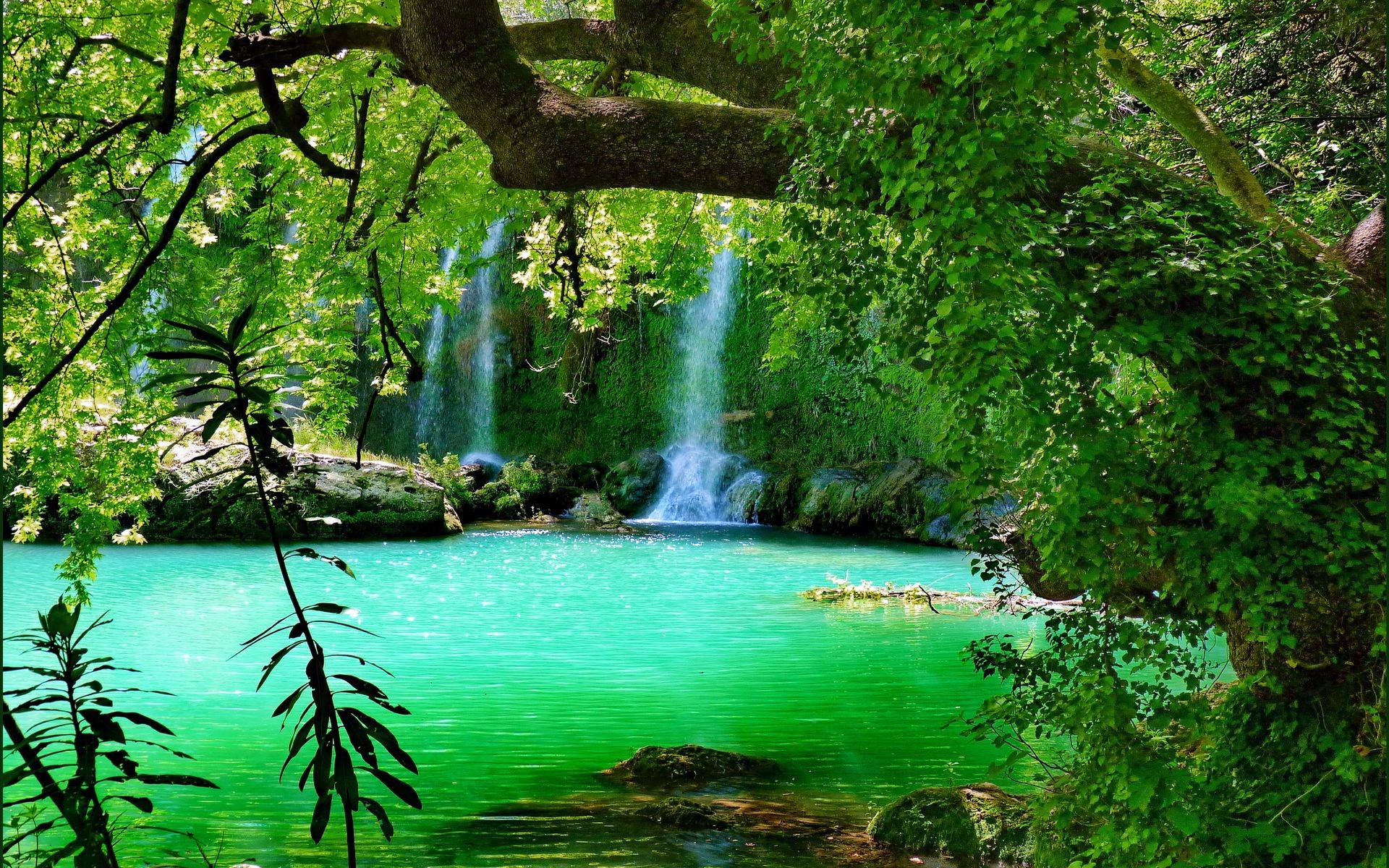 Forest Waterfall Background