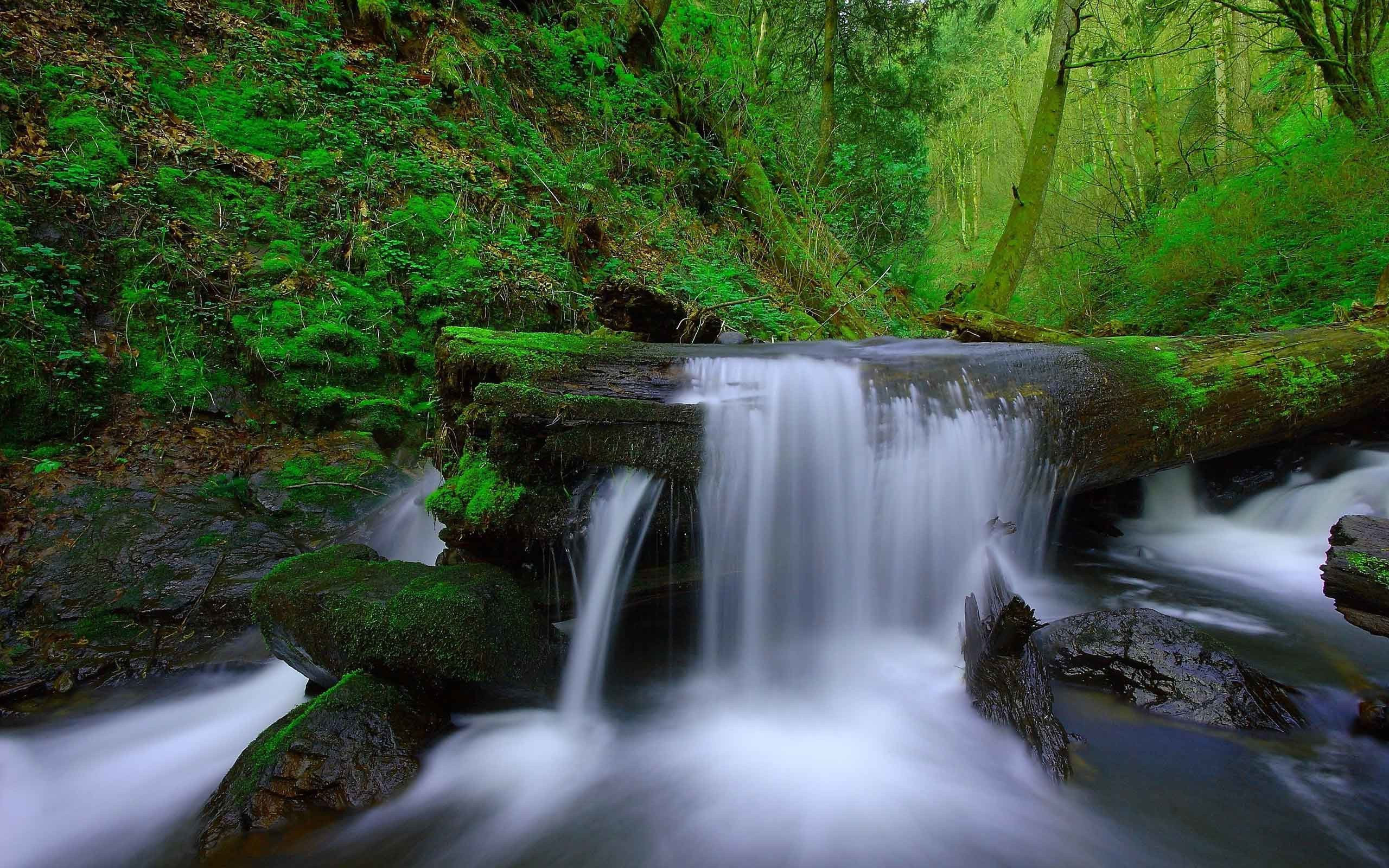 Waterfalls Moss Rocks Waterfall Forest River Landscape Nature Trees Stream  Background Images