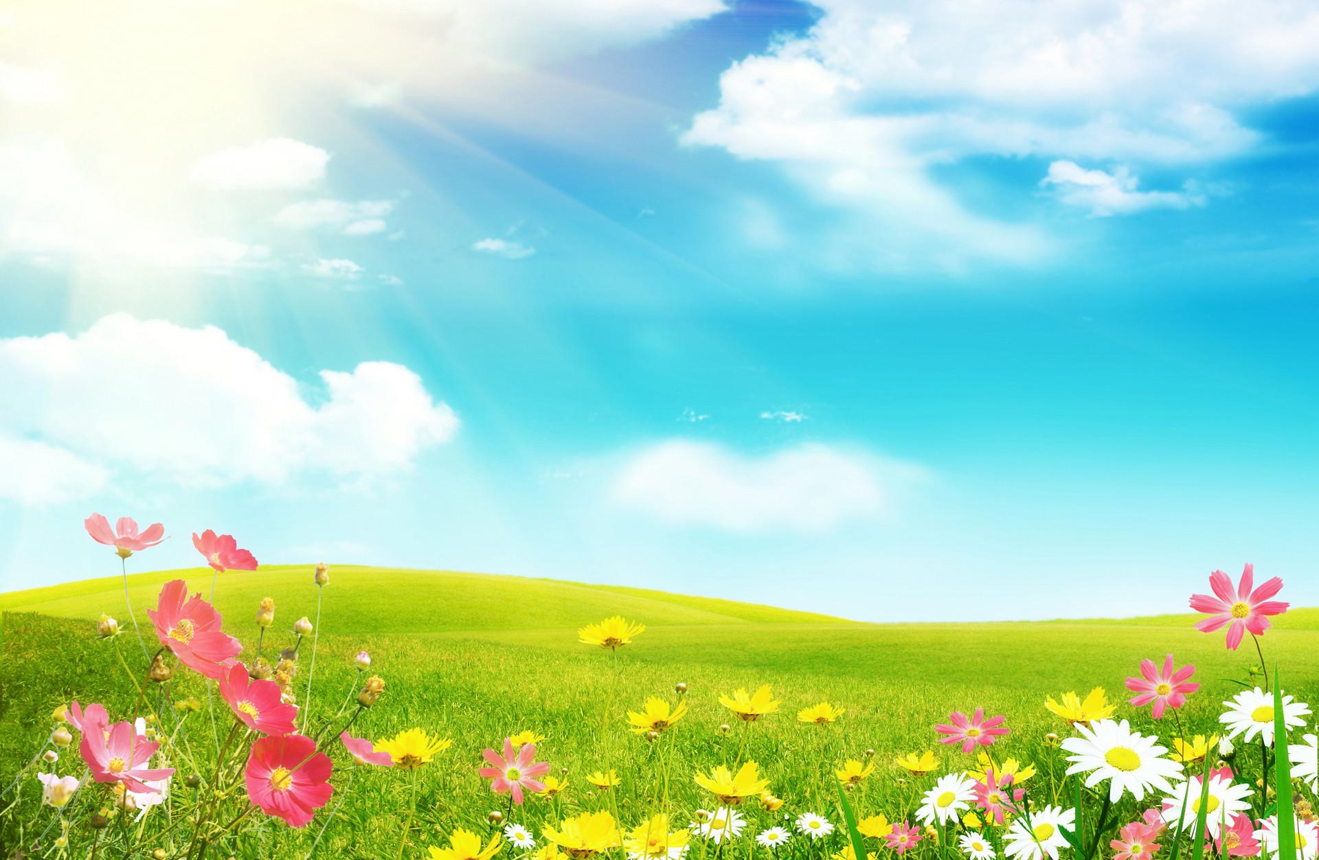 Spring White Flowers Wallpaper Spring Wide Full Screen Wallpaper