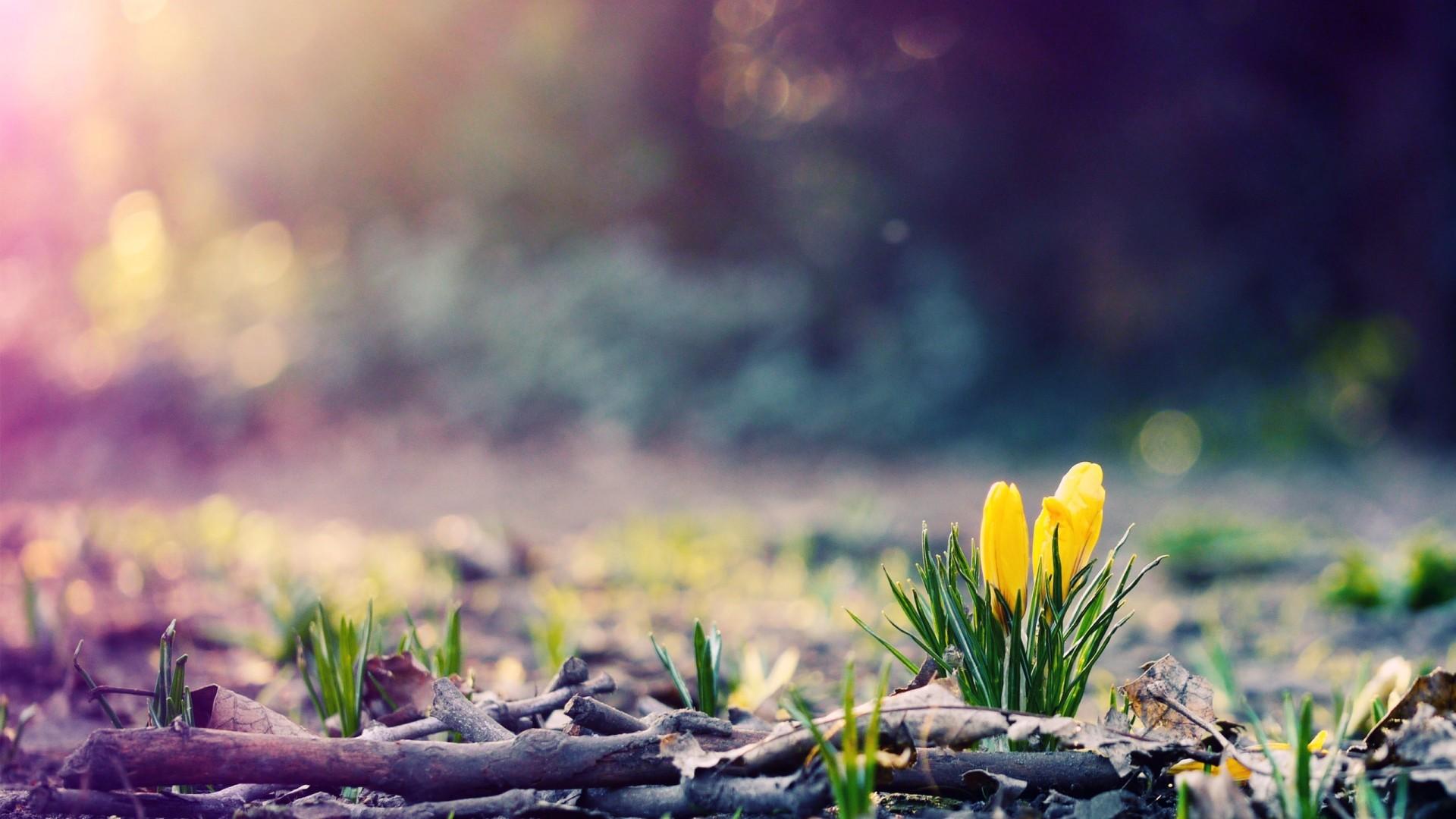 Spring 1080p Background Wallpaper
