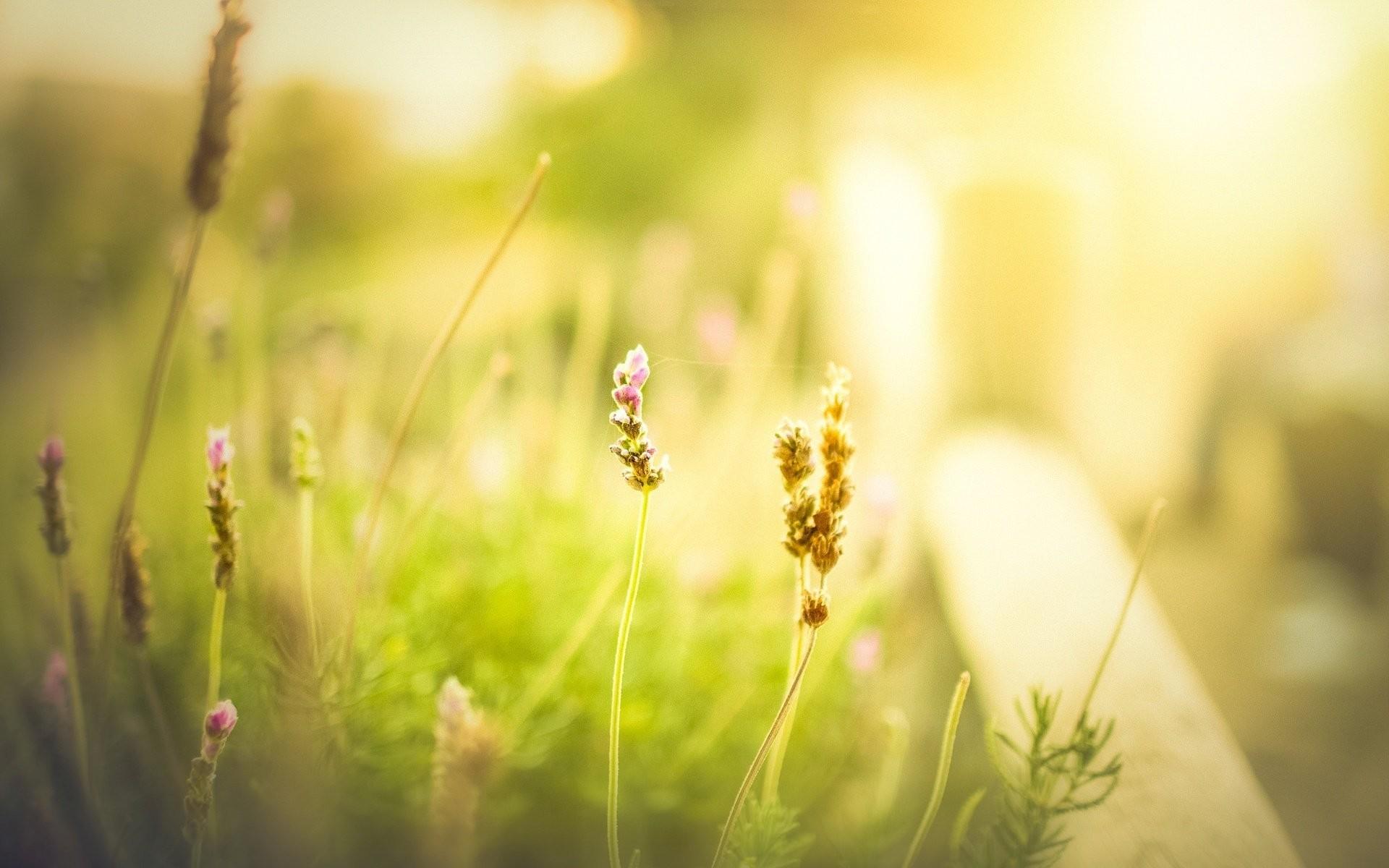 flower green grass meadow the field blur day morning summer spring flower  greens background wallpaper widescreen. Your screen: 1024×1024