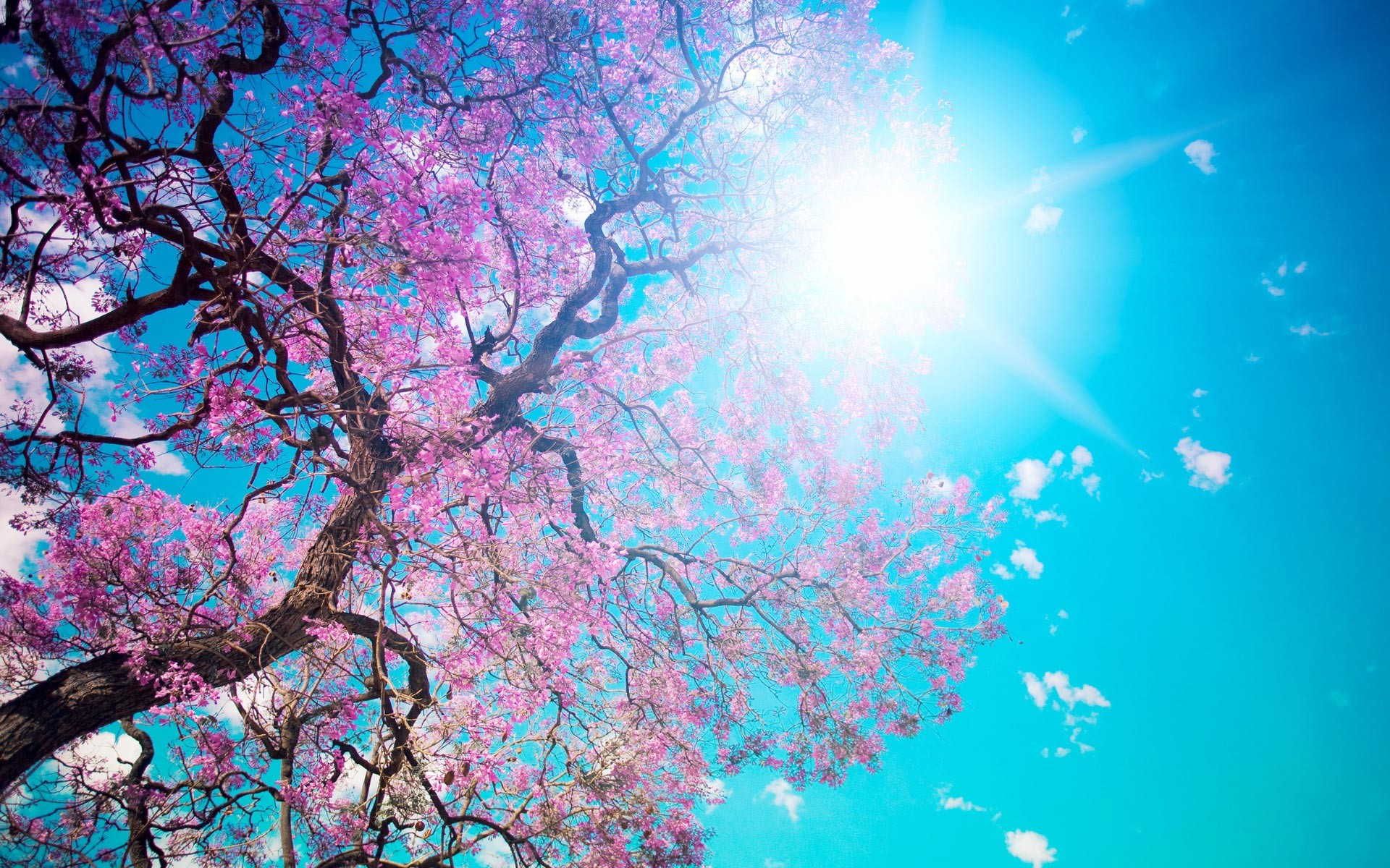 Free Scenery Wallpaper – Includes the Scene of Blooming Spring, Simply .