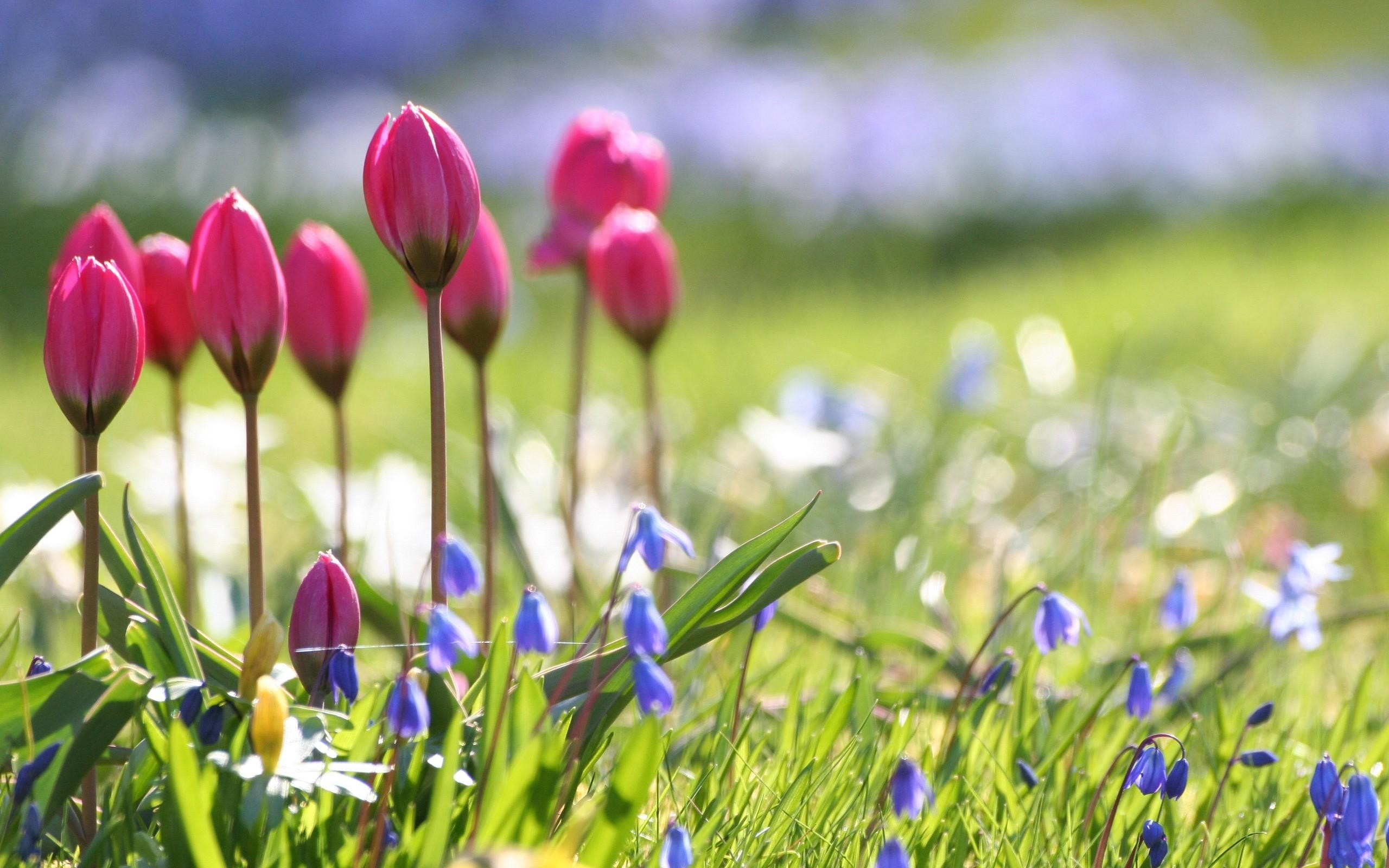 25+ best Spring flowers wallpaper ideas on Pinterest | Golden retriever  labrador, Puppy flowers and Cute puppy pics