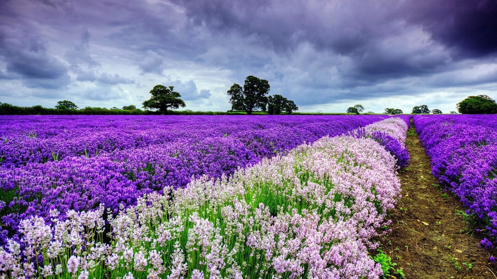Beautiful Field of Flowers Spring Image.