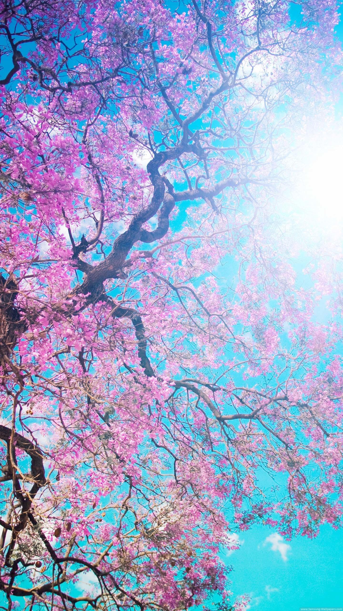 Spring Flowering Lock Screen Samsung Galaxy S5 Wallpaper HD