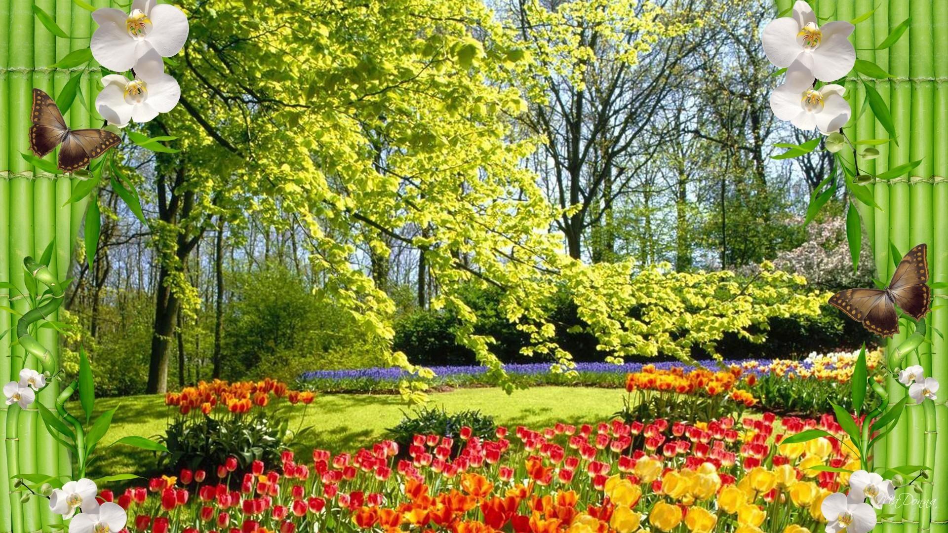 Bamboo Trees Paradise Spring Summer Floral Paaradise Flowers Park Wallpaper  Windows 7 Flower – 1920×1080