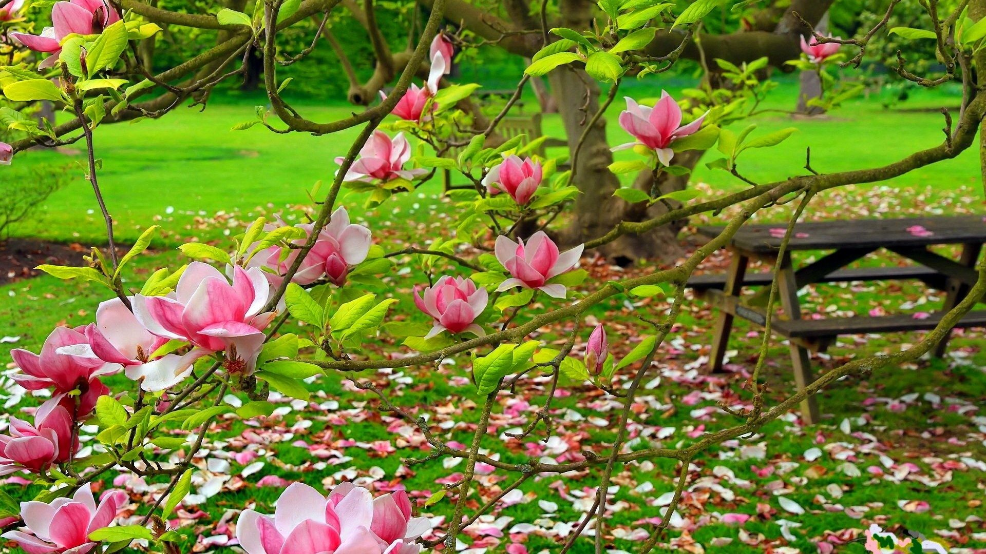 Spring Tag – Magnolia Slope Green Pretty Lovely Tree Leaves Pink Bench  Forest Branches Relax Beautiful