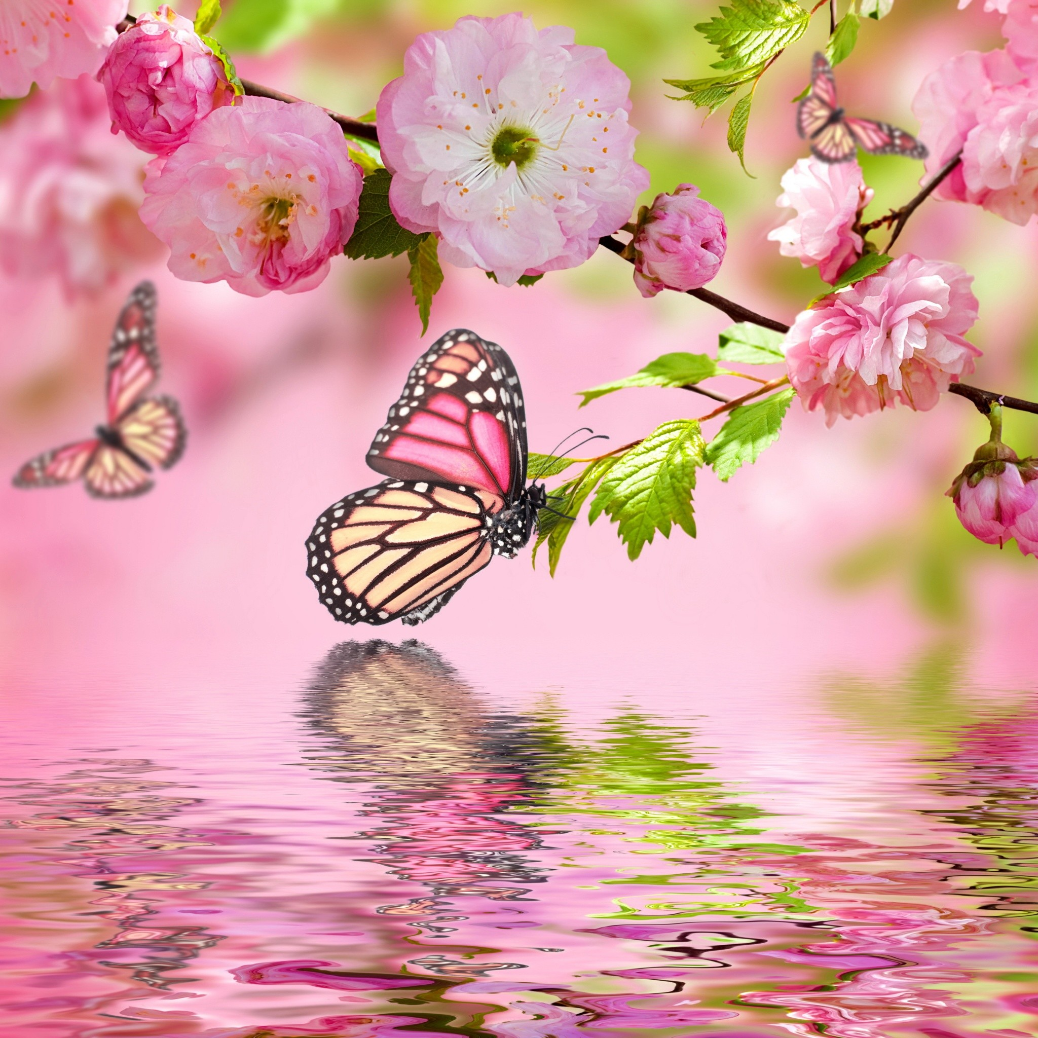 Spring Blosson with Butterfly. Tap for more Dreams of Spring Wallpapers for  iPhone & Android