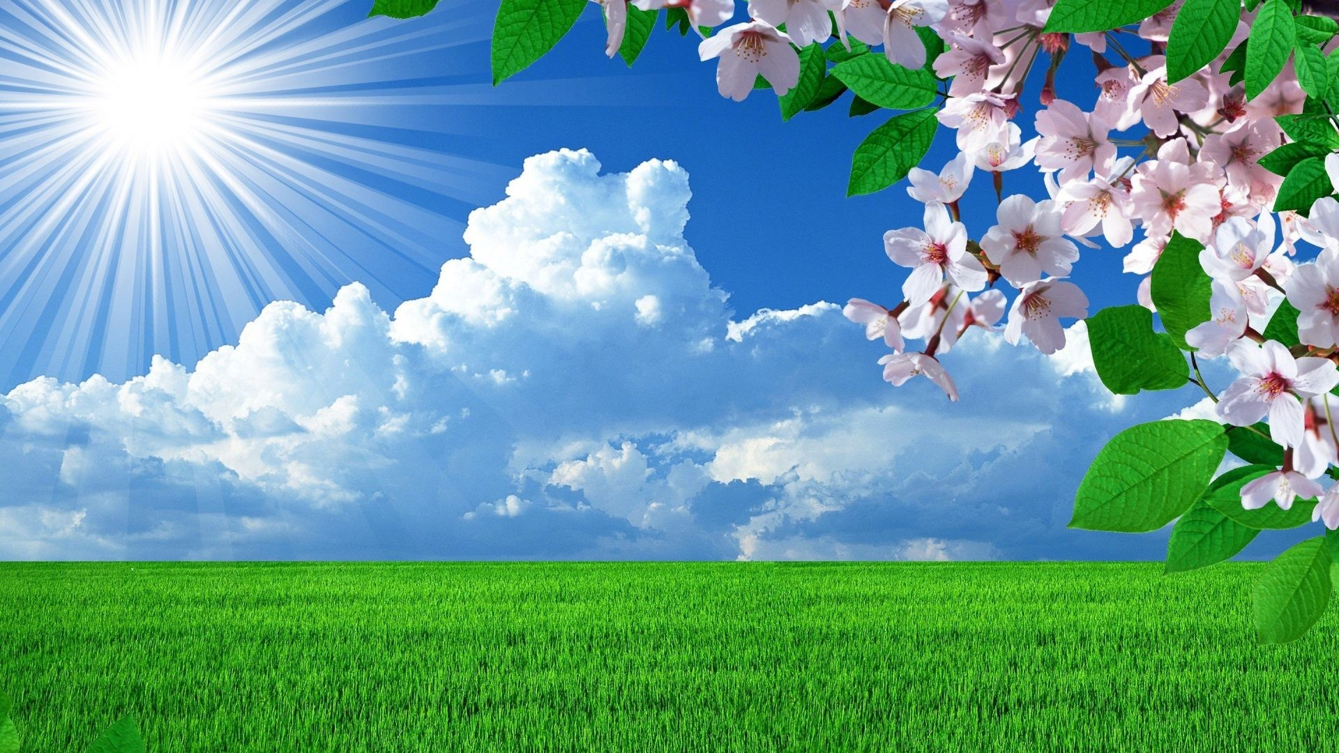 #228811 Color – Nature Landscape Flowers Landscapes Trees Sky Spring Yellow  Hd for HD 16