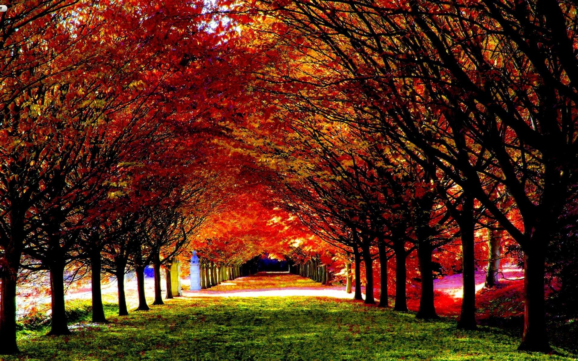 Fall Landscape Wallpaper – Wallpaper HD
