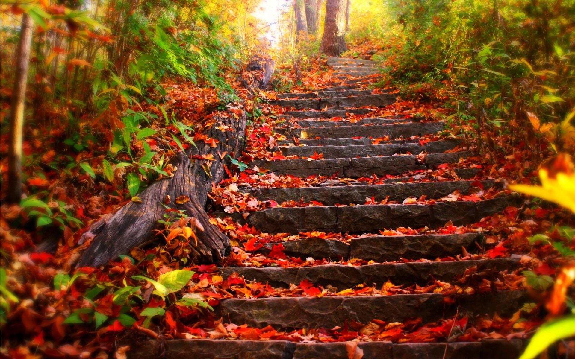 Fall Wallpaper Autumn Landscape Steps Scenery Desktop ~