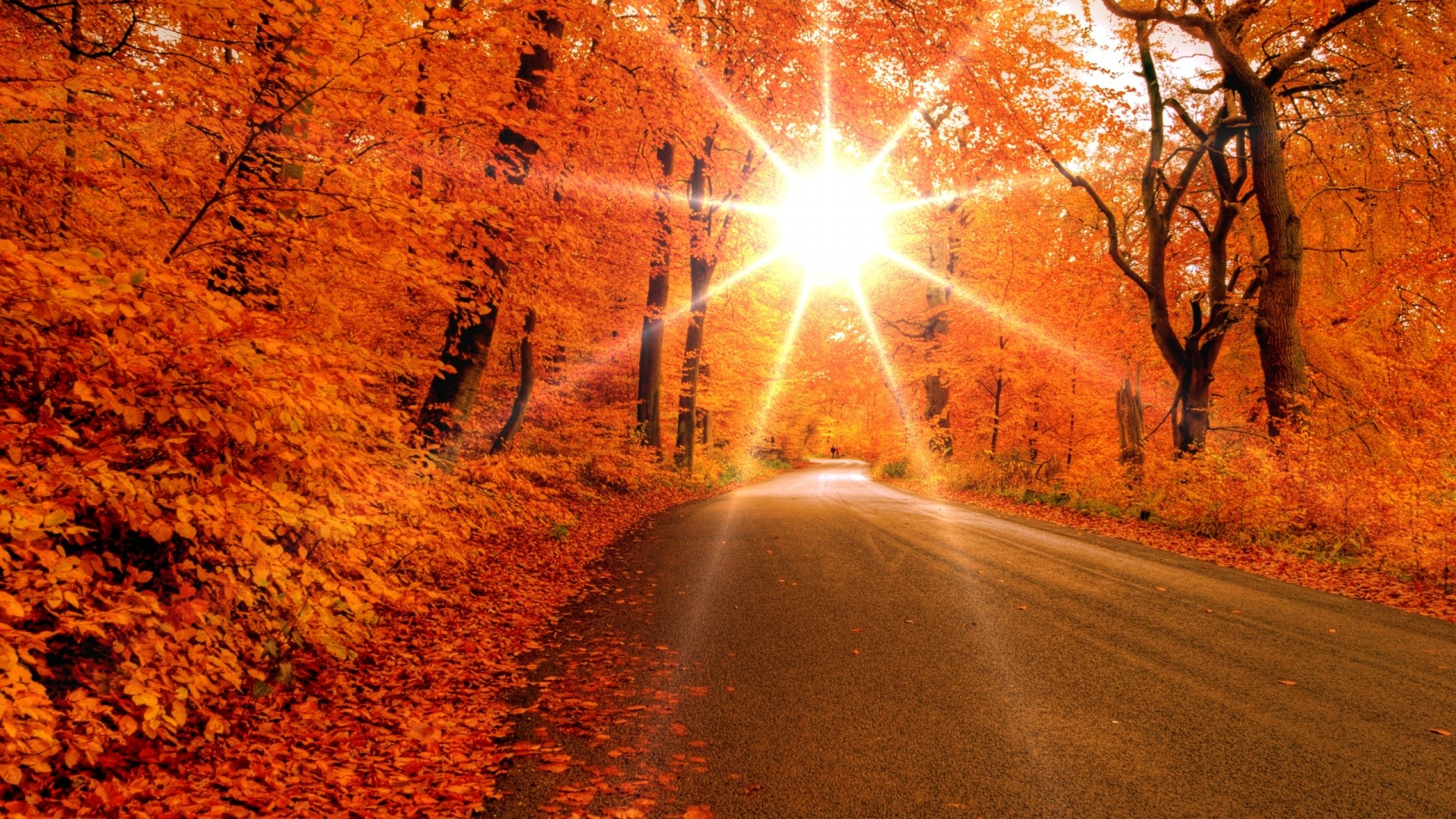 Beautiful Sunset On The Autumn Forest Wallpape #6762 Wallpaper .