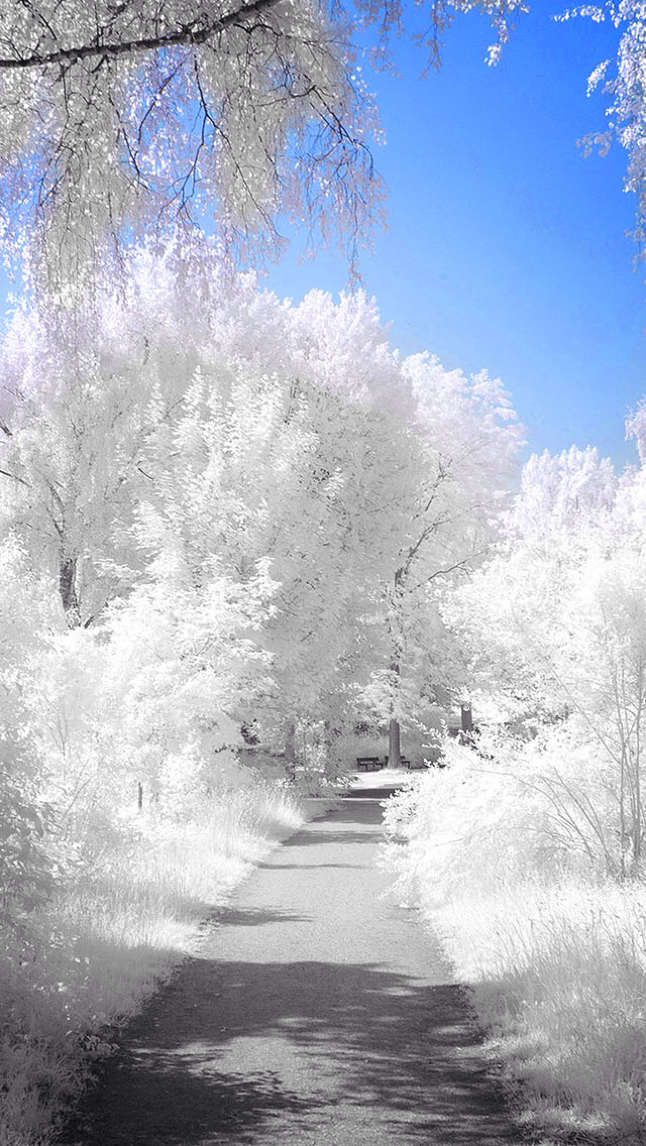 Winter Path | iPhone Backgrounds | Pinterest