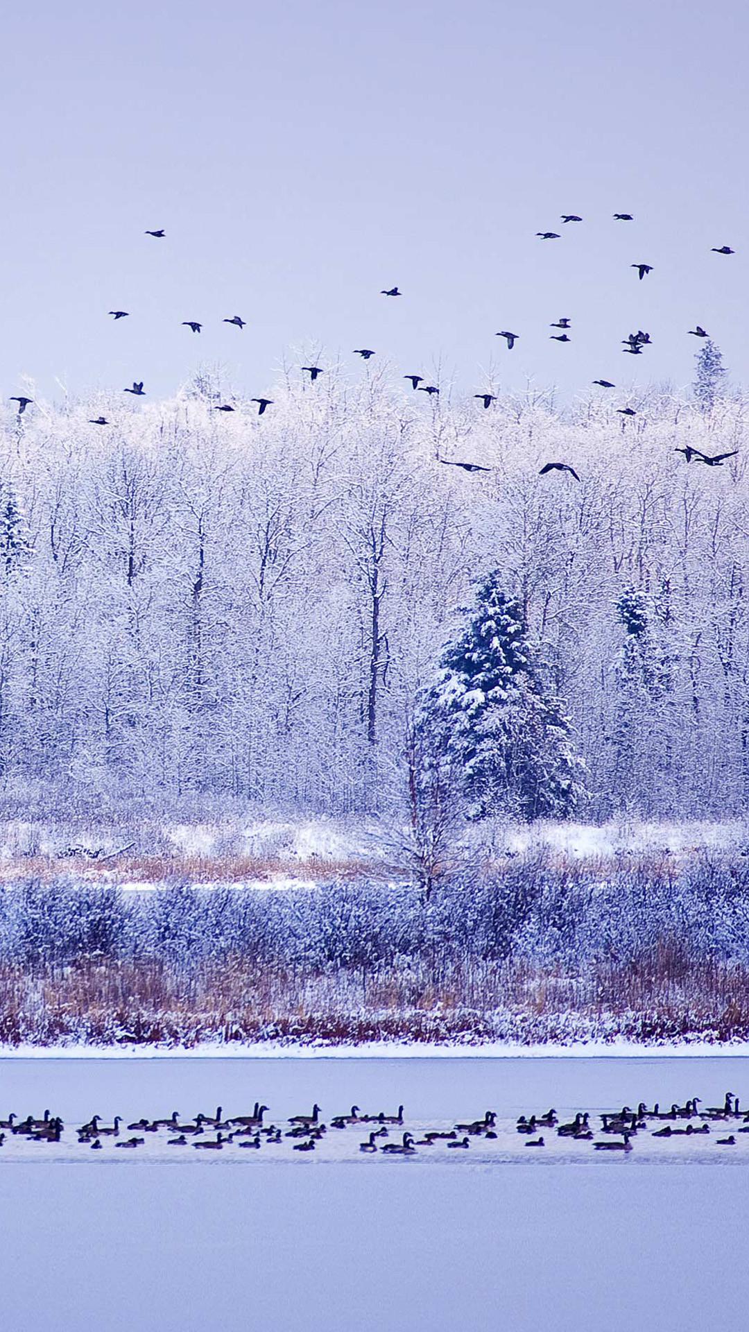 Winter River Migratory Birds iPhone 8 wallpaper