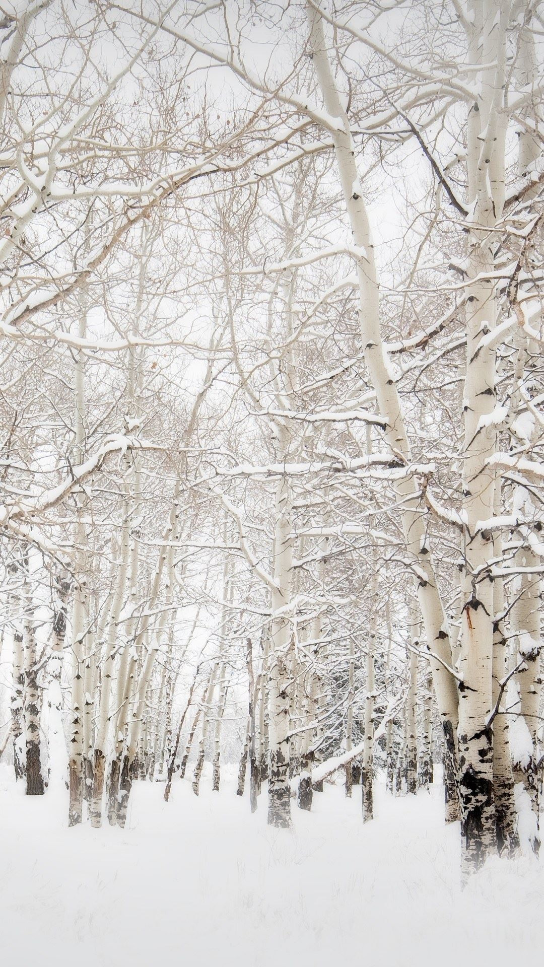 Birch Trees Winter Landscape iPhone 6 wallpaper