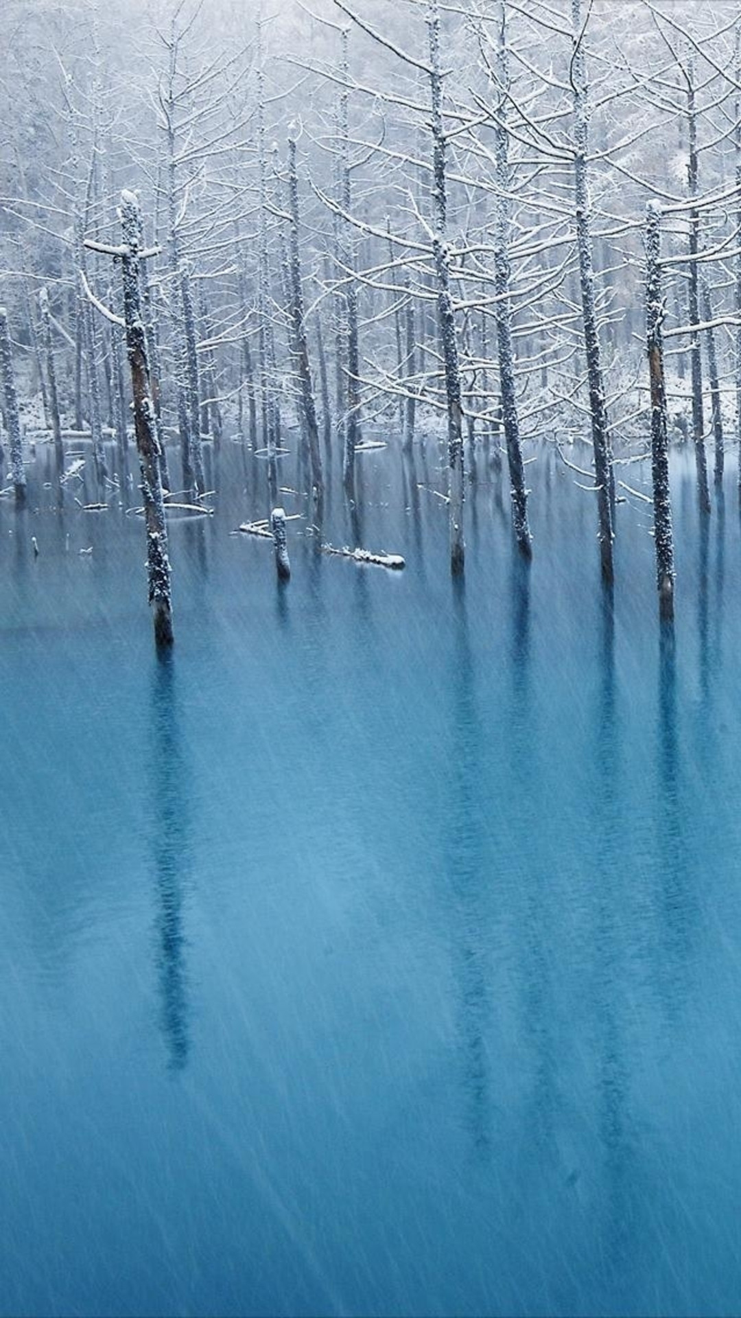 Pure Winter Wither Tree Grove Frozen Lake Landscape