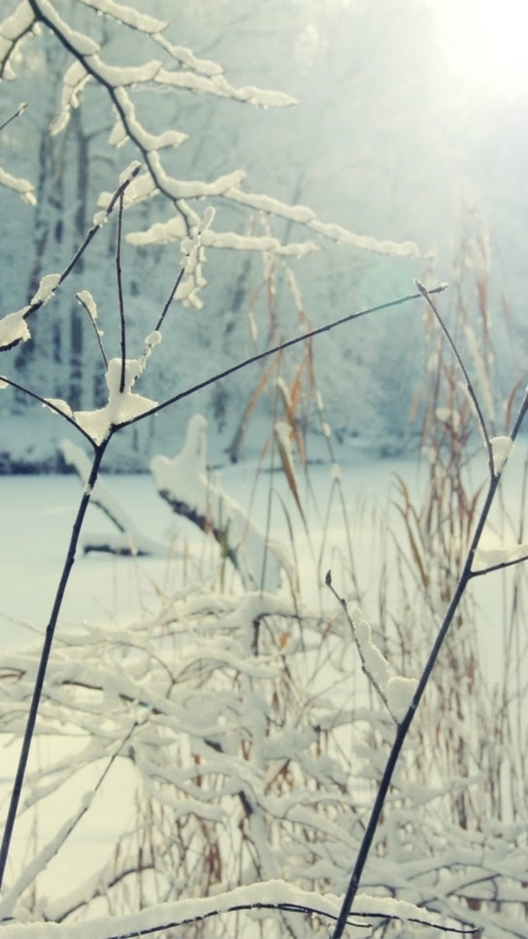Nature Sunshine Winter Snowy Leafy Branch iPhone 8 wallpaper
