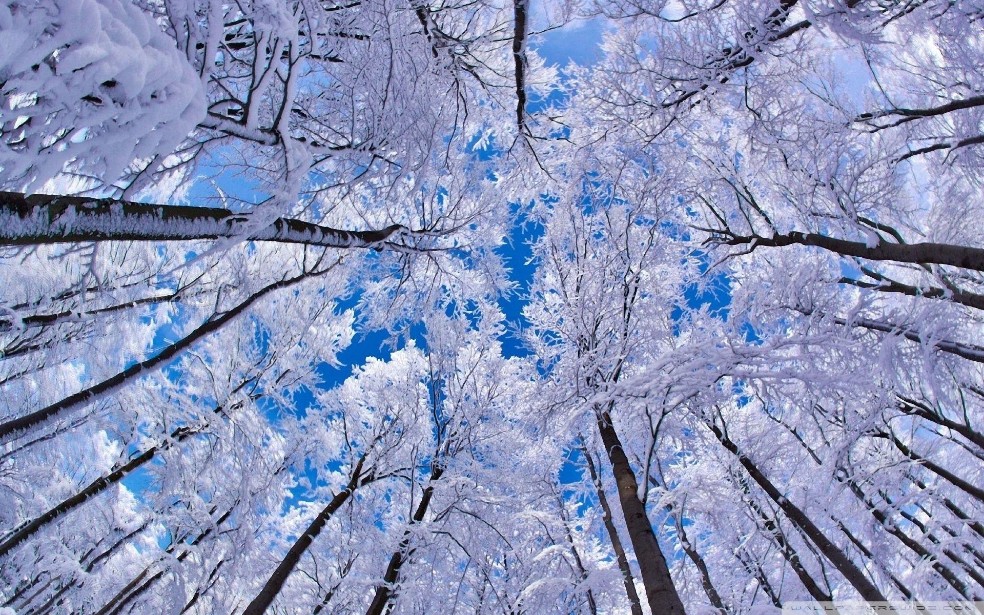 wallpaper-winter-iphone-photo-download-free-13