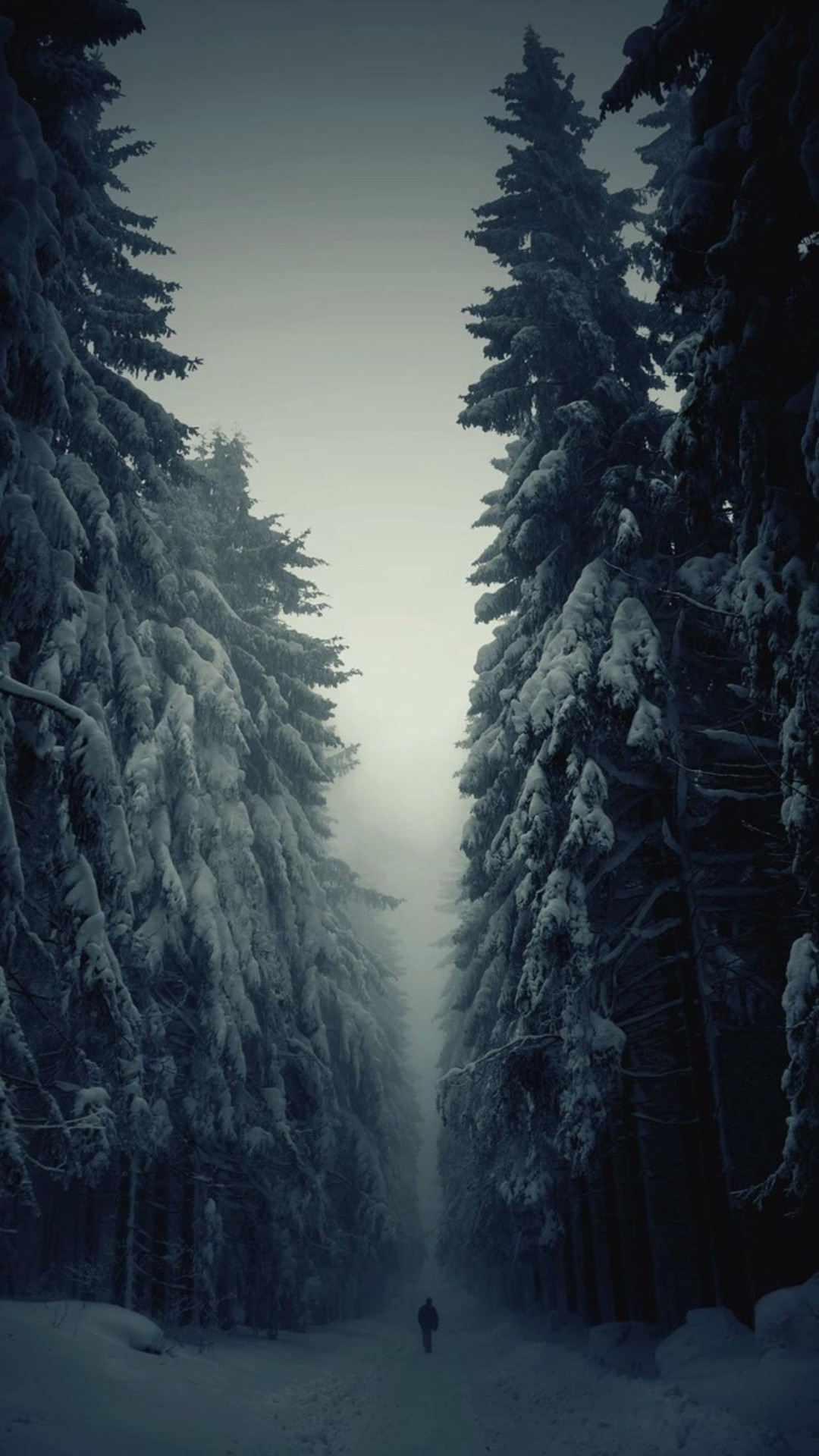 Snow Forest Lonely Walk iPhone 6 Plus HD Wallpaper …