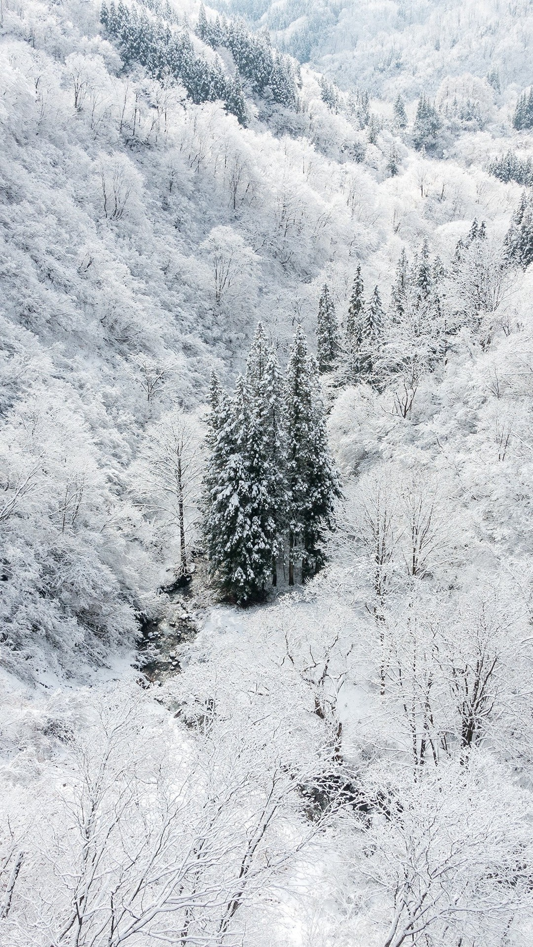 Winter White Snow Wood Forest Mountain iPhone 8 wallpaper