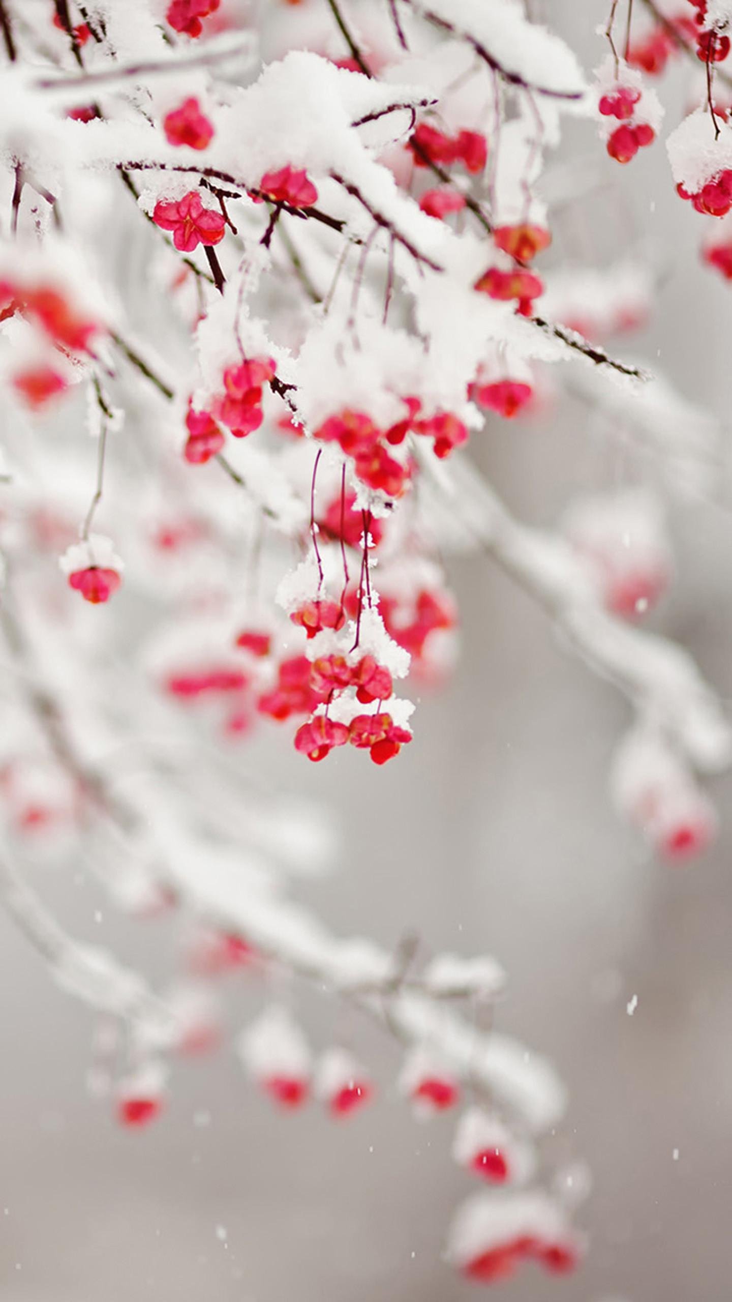 Winter Fruit Galaxy S7 Wallpaper