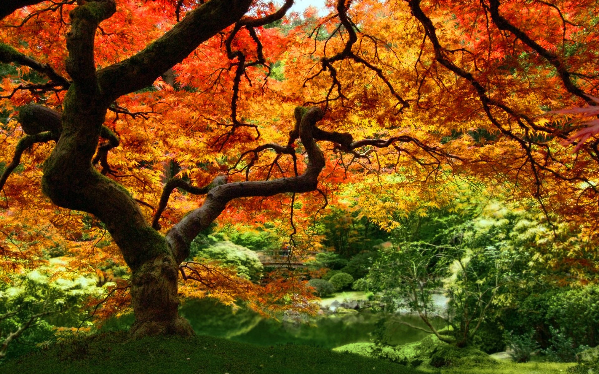 Autumn Leaves Pictures Fall Foliage | autumn leaves forest trees Windows  Vista Autumn Leaves Wallpaper .