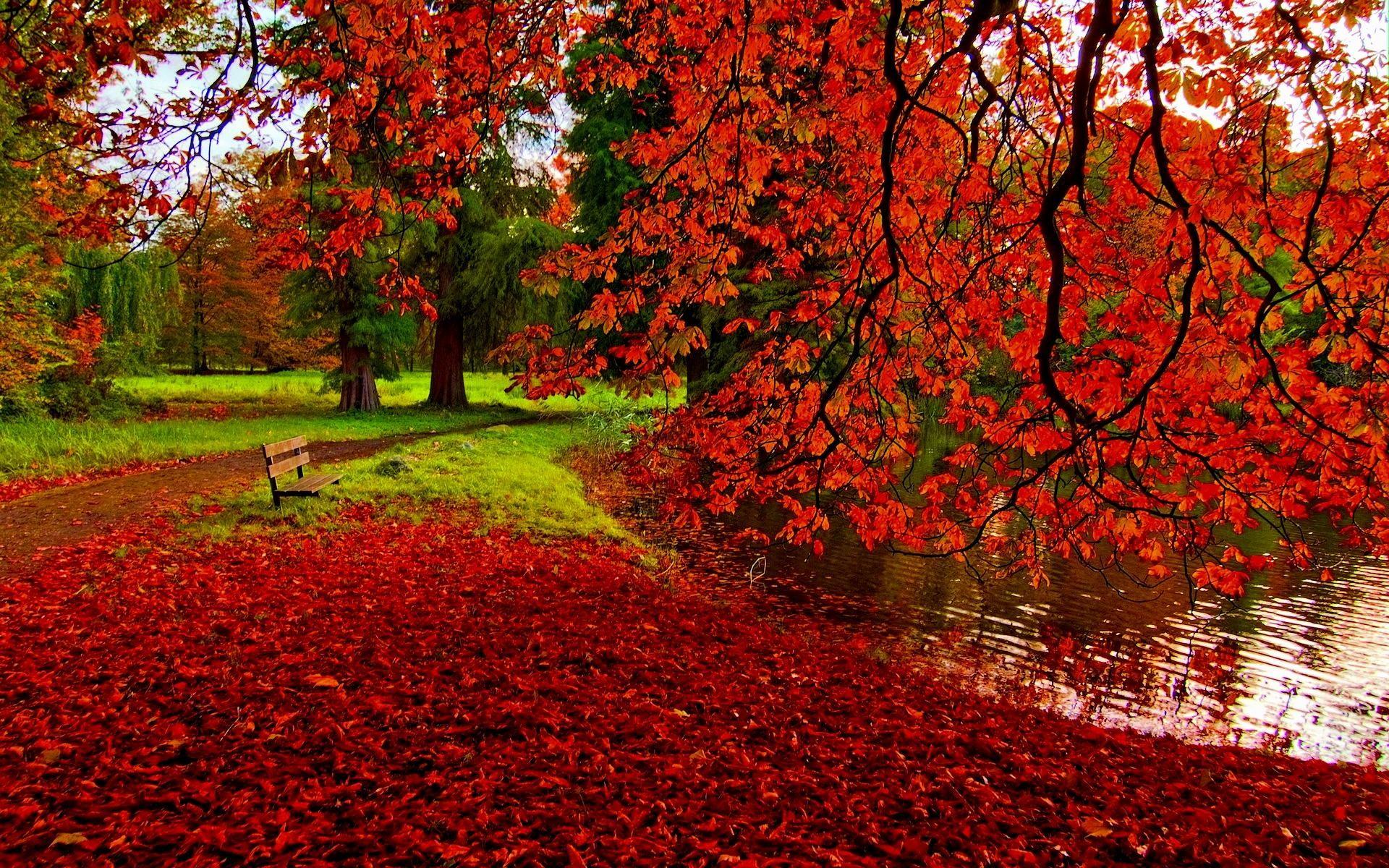 wallpaper.wiki-Fall-Foliage-HD-Wallpaper-PIC-WPE008820