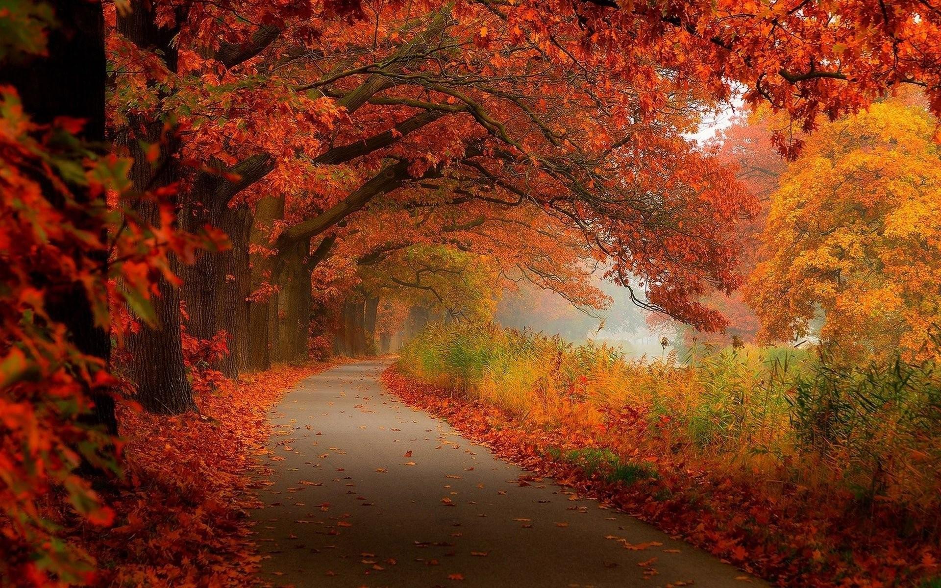 Fall Scenery Photo HD.