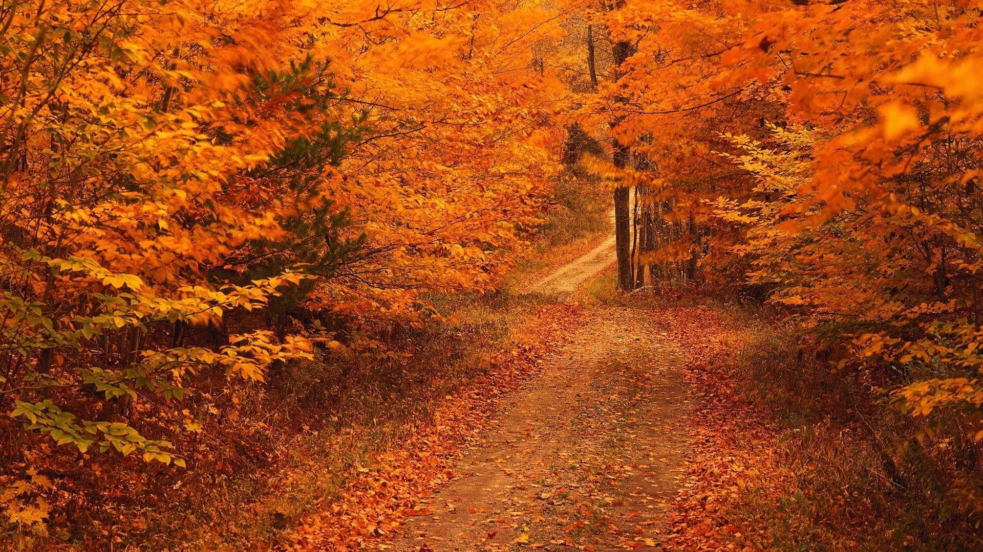 Image: Fall Foliage Wallpaper For Desktop