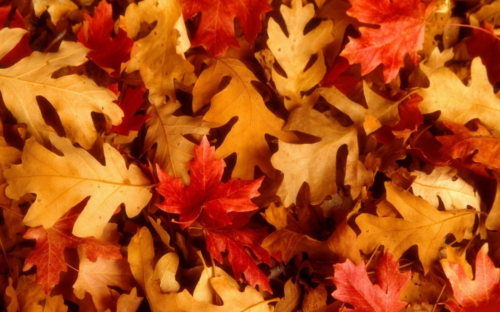 wallpaper.wiki-Fall-Foliage-HD-Photo-PIC-WPE008846