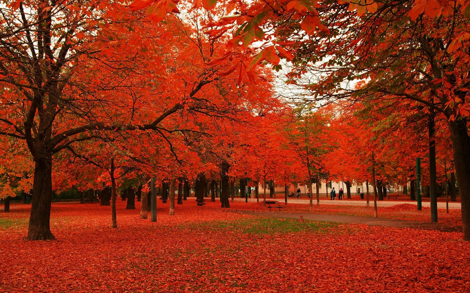 wallpaper.wiki-Fall-Foliage-Image-Download-Free-PIC-