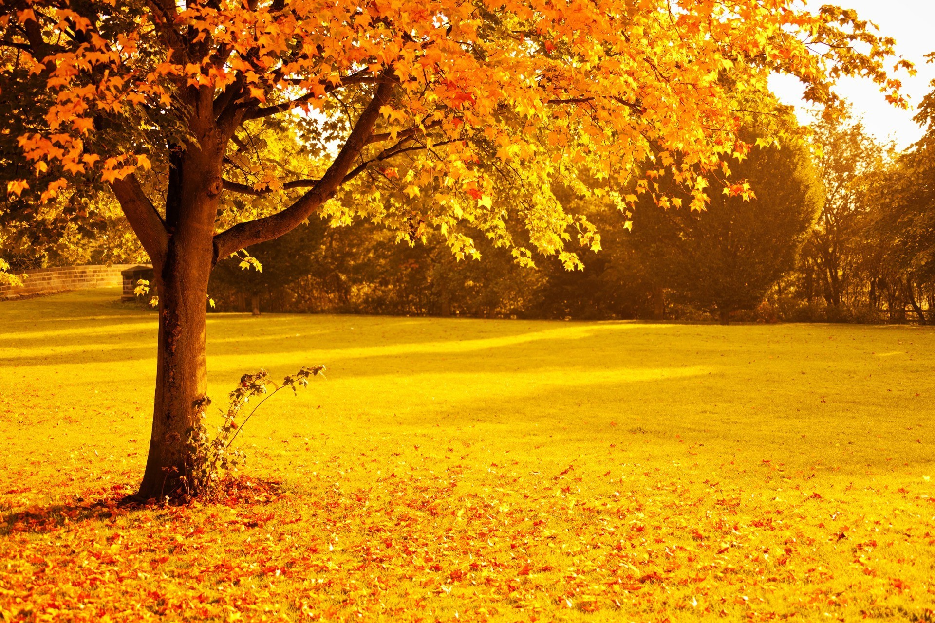fall, Foliage, Gold, Leaves, Nature, Orange, Park, Red, Seasons, Sunlight,  Sunset, Trees, Yellow, Lights Wallpapers HD / Desktop and Mobile Backgrounds
