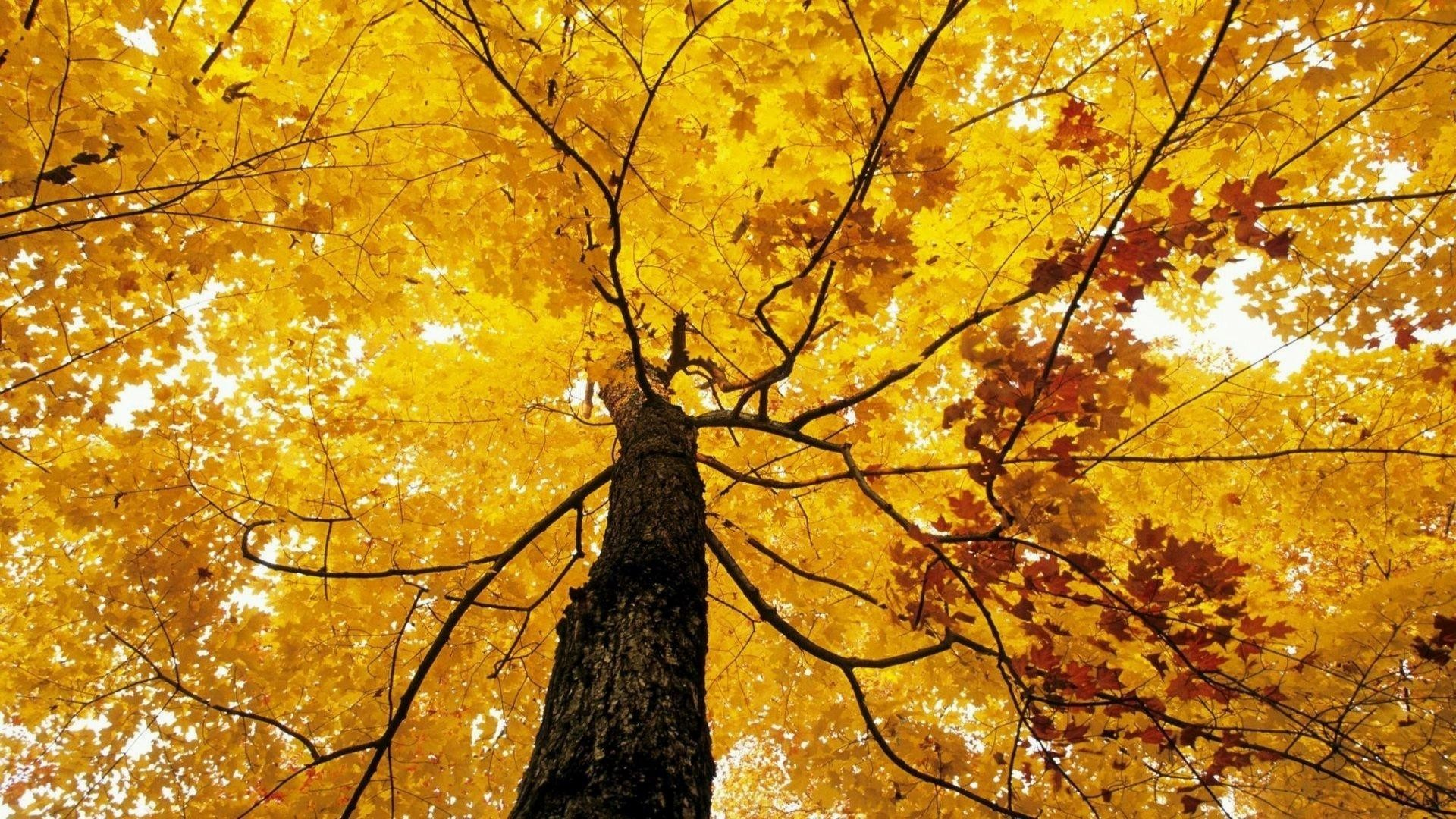 wallpaper.wiki-Fall-Foliage-Pictures-PIC-WPE008834