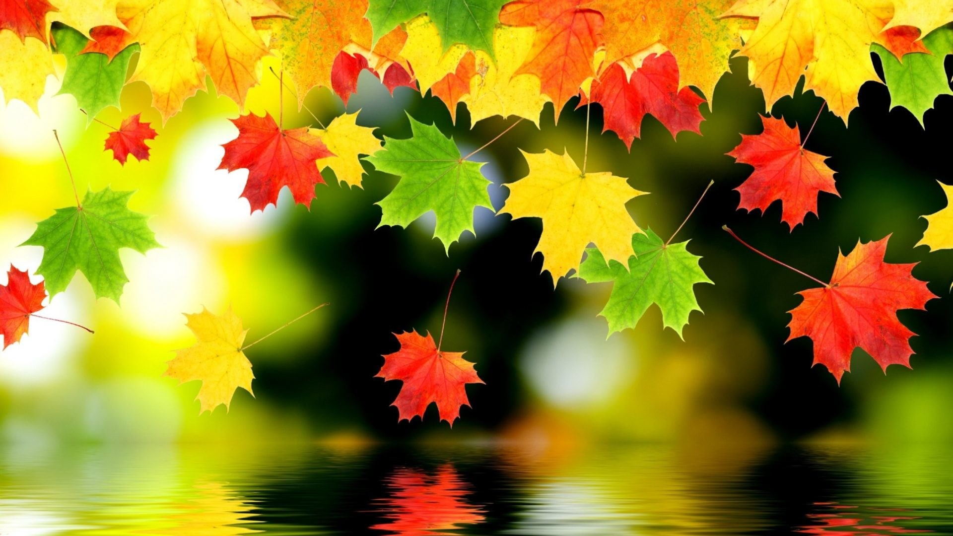 #668800 Color – Foliage Autumn Water Fall Nature Backgrounds Iphone 6 for  HD 16: