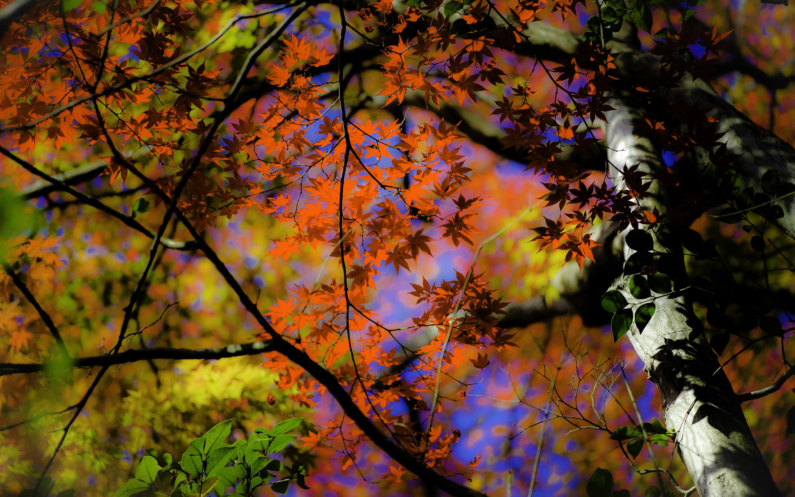 … 2560×1600 · a fall-foliage …