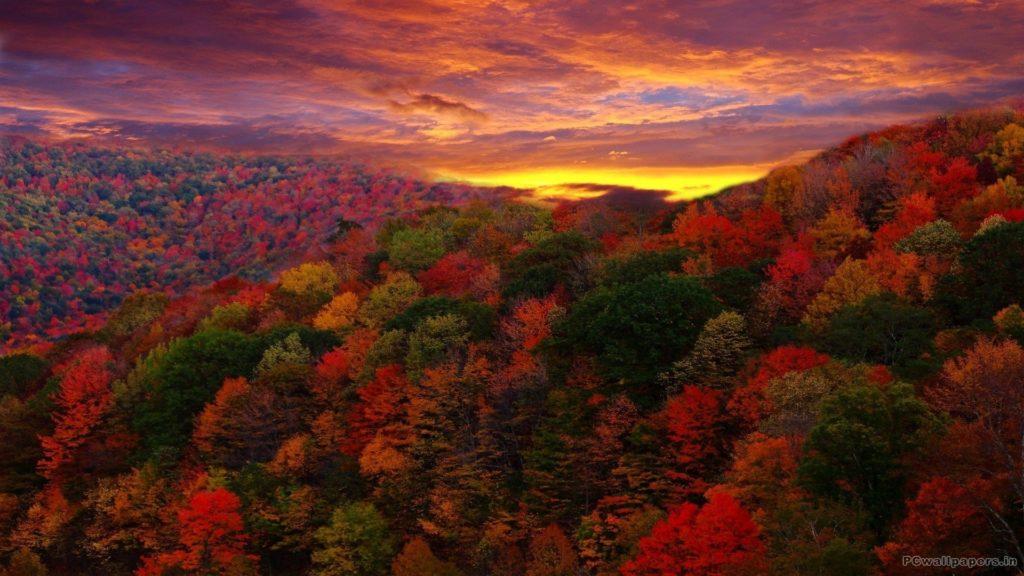 Fall Foliage 548776
