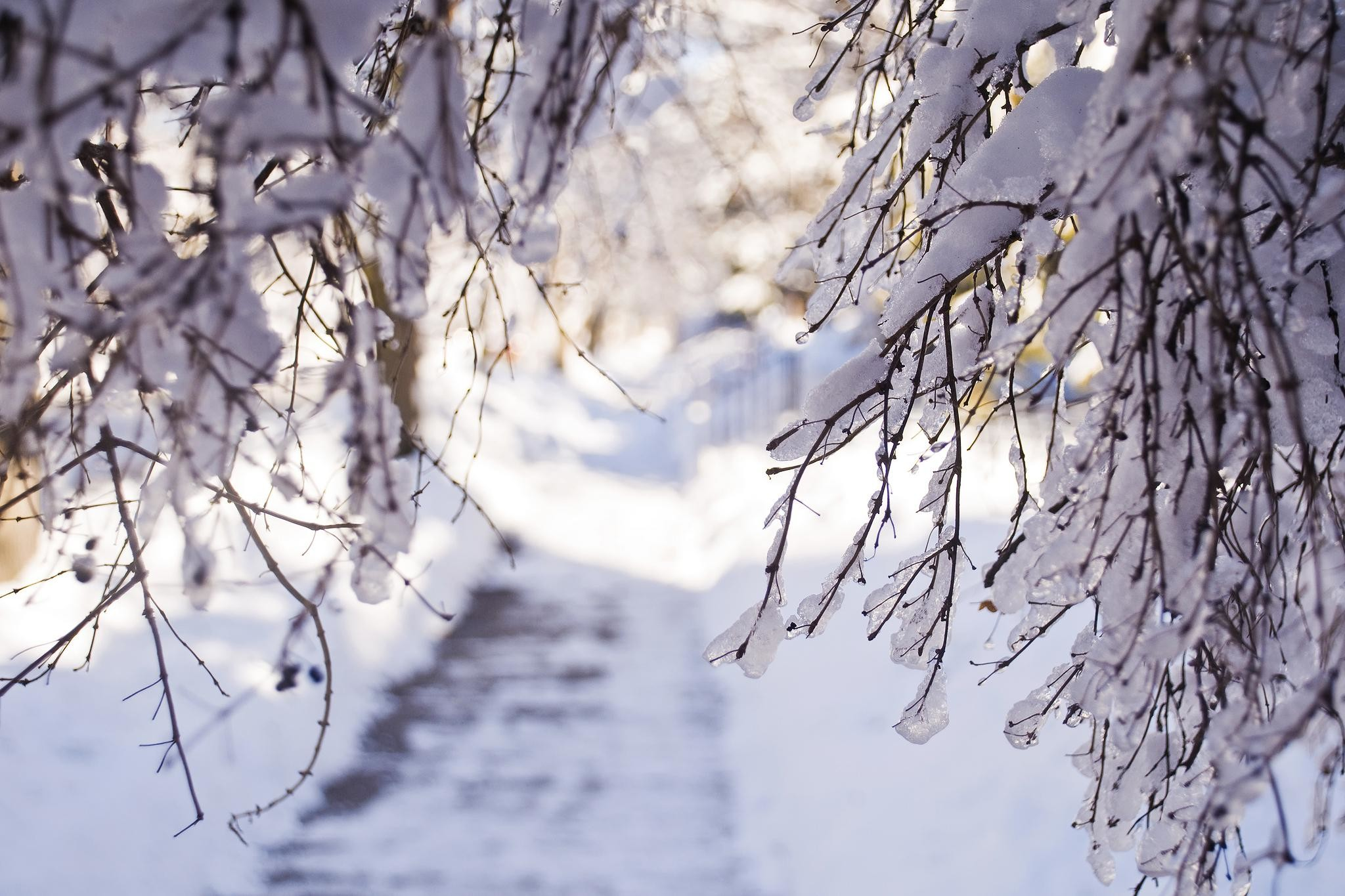 Winter Snow Branches Light Desktop Background Images