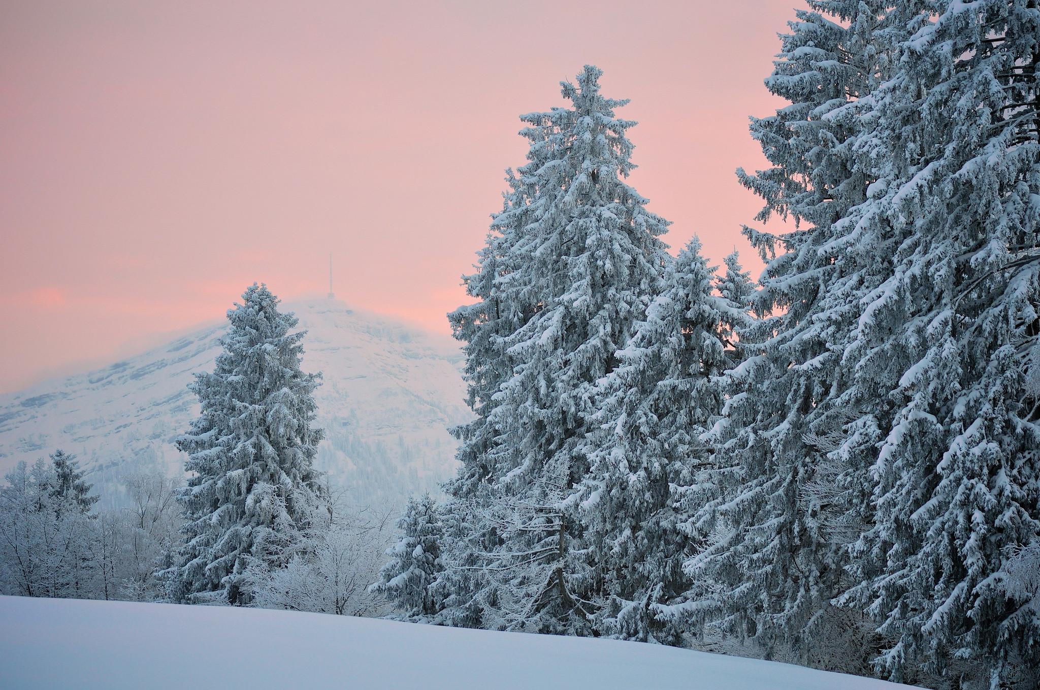Blue Spruce Winter Snow Desktop Wallpaper Uploaded by DesktopWalls