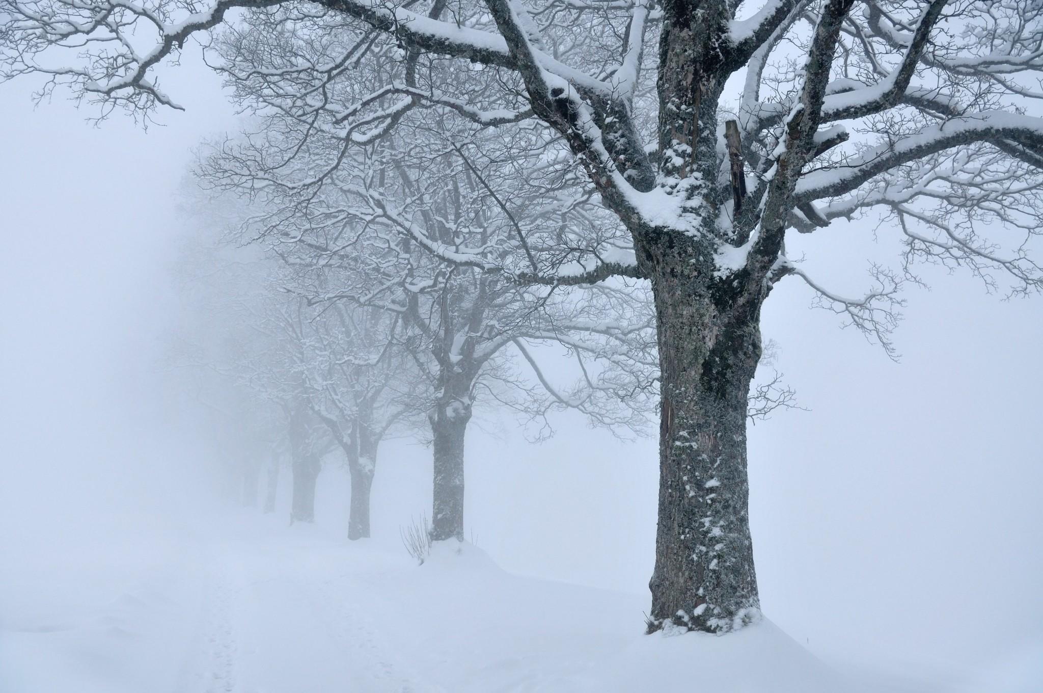 snow wallpaper desktop backgrounds free