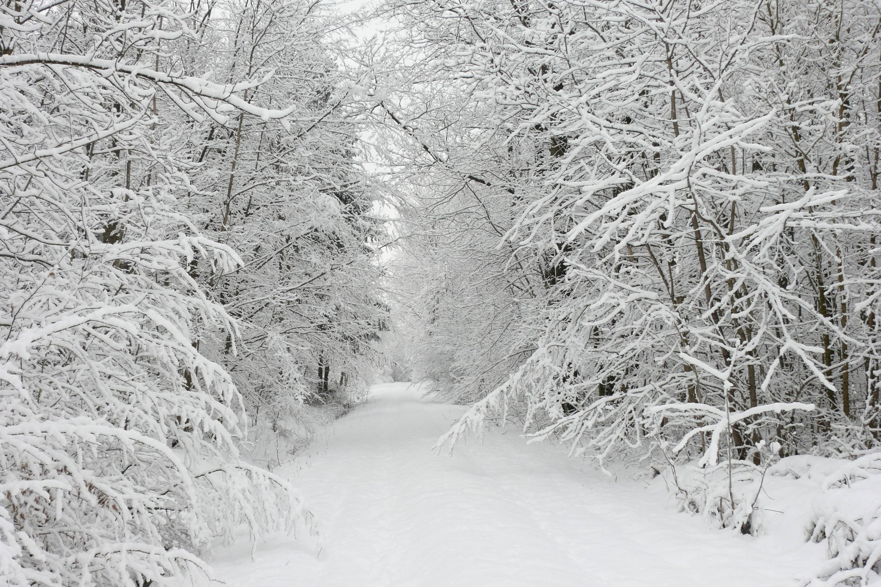 Beautiful Winter Snow HD Backgrounds – Nature Wallpapers