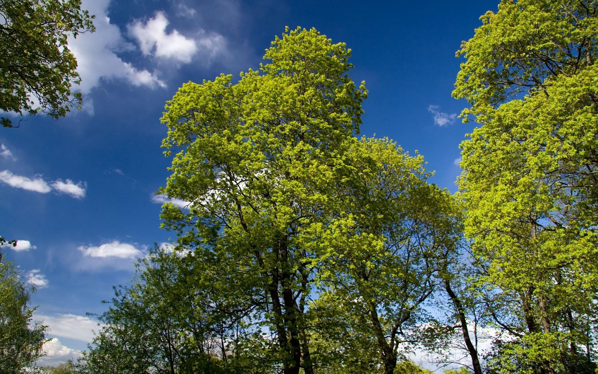 wallpapers screensavers spring green trees 1920×1200