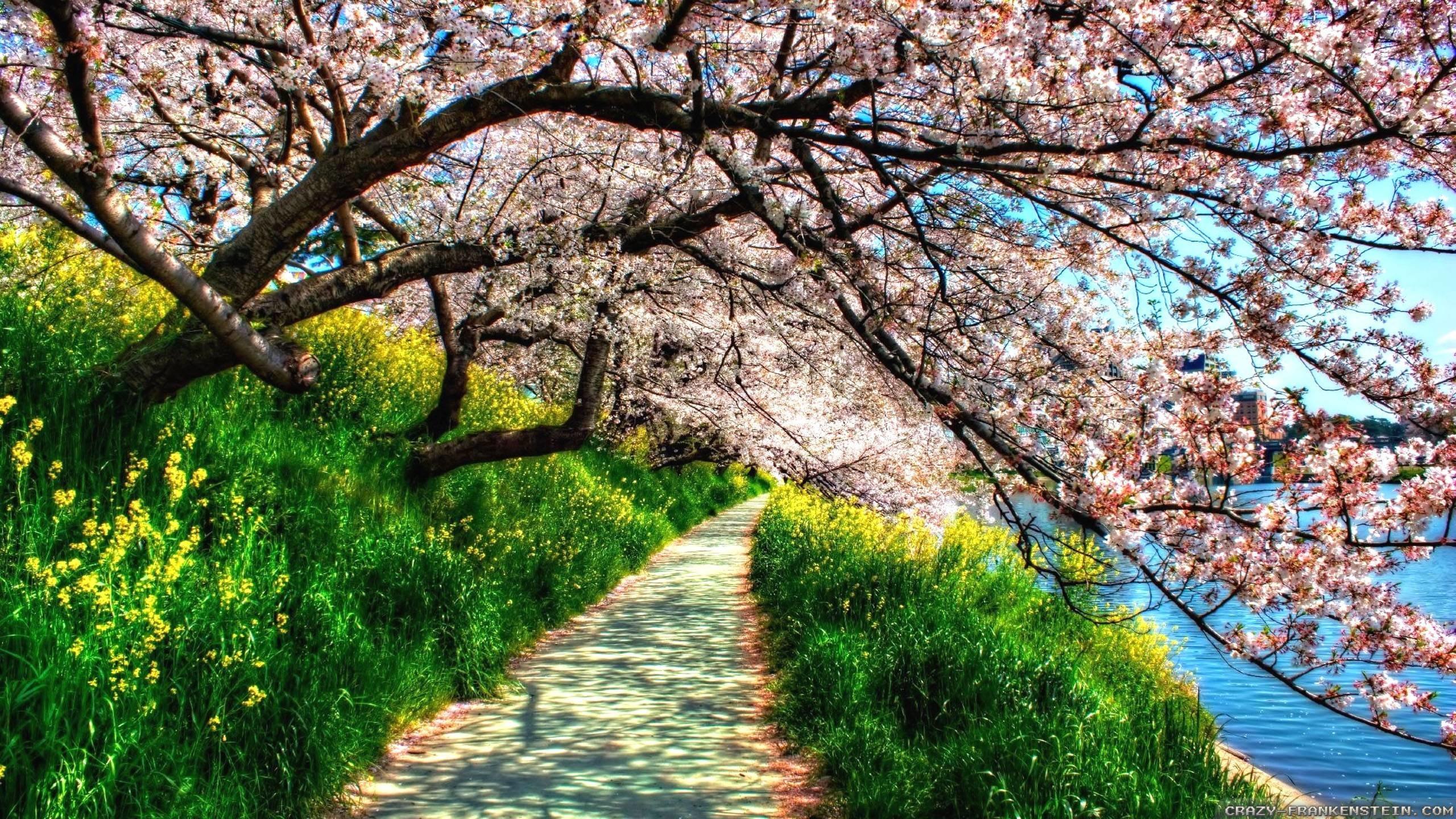 Spring Nature HD Wallpapers | fbpapa.