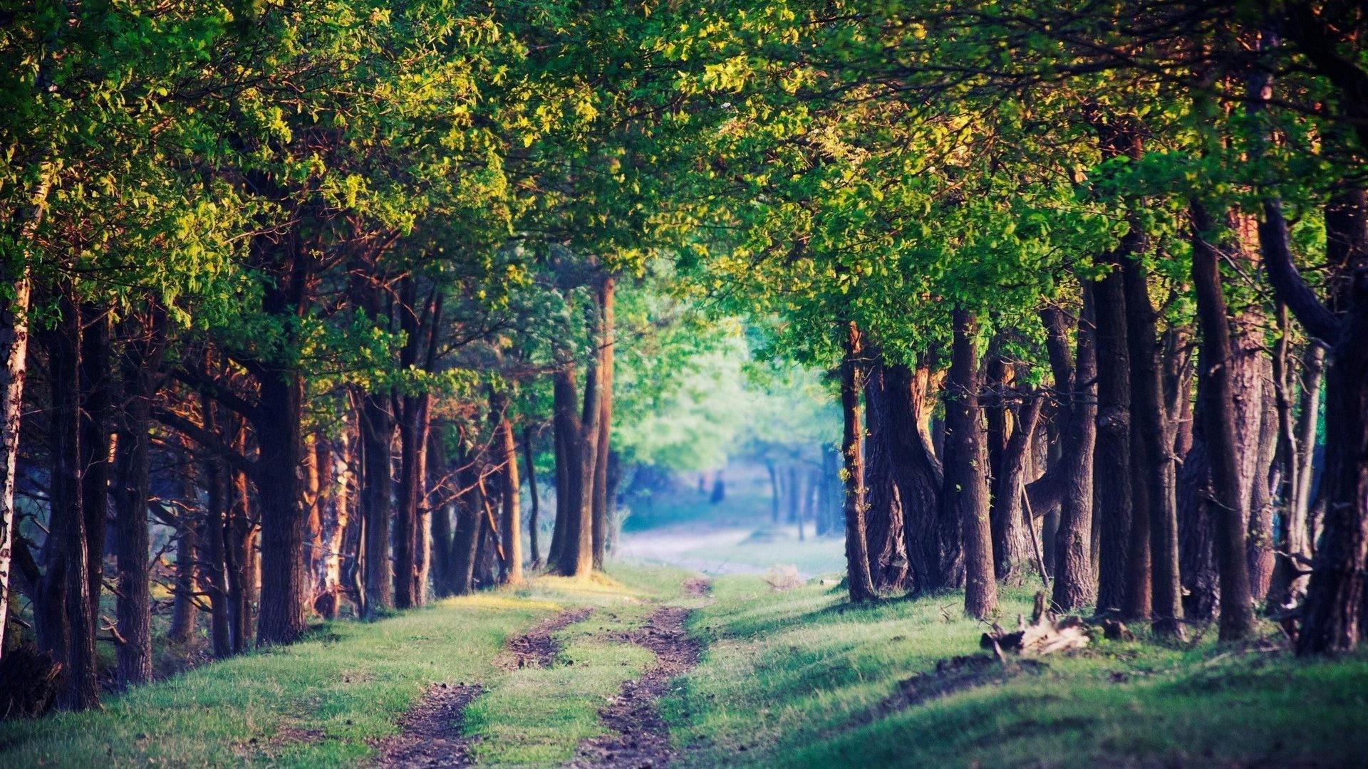 January 19, 2017 – Nature Beautiful Path Trees Scenery Fullscreen Wallpaper  for HD 16: