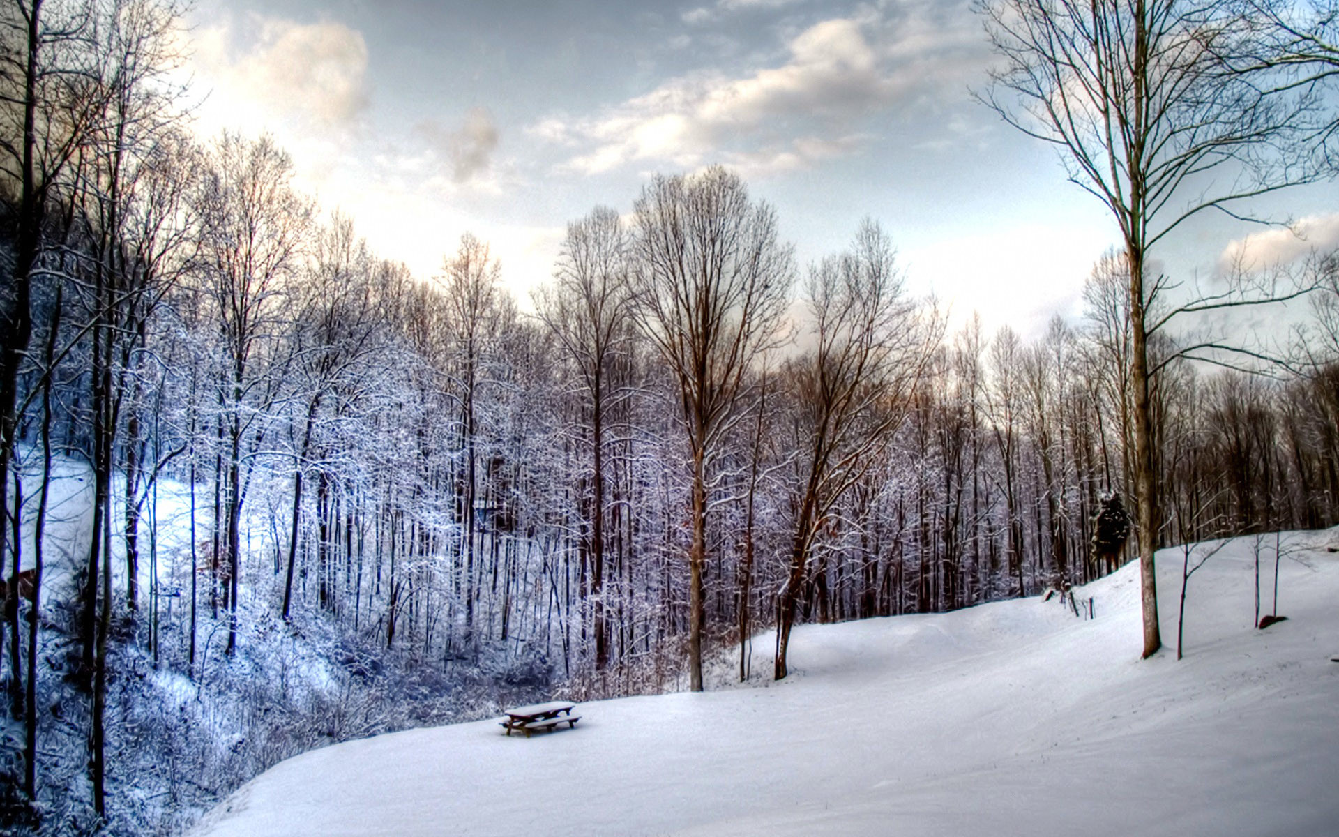 1920*1200 Widescreen Winter Snow Scenes – Dreamy Winter Snow Wallpaper .