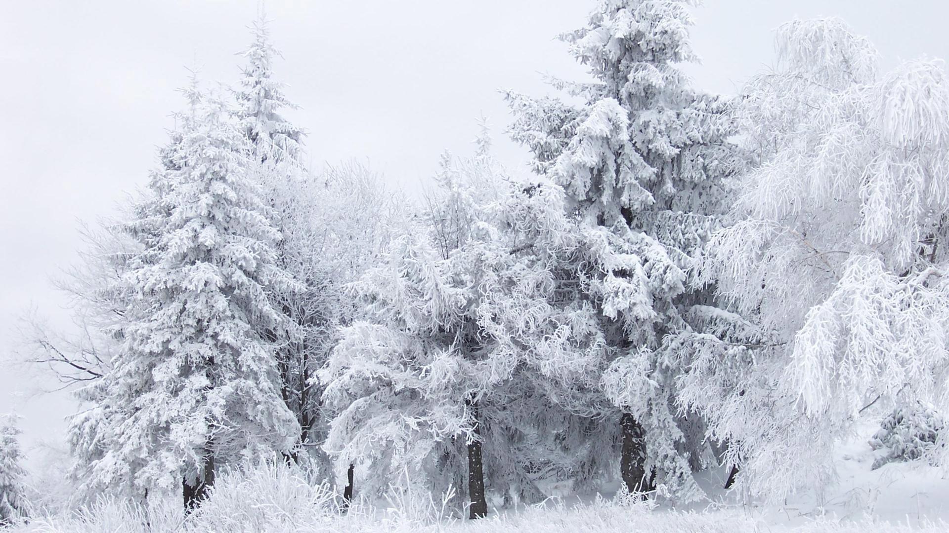 Snow Winter Fantasy Mac HD Wallpapers January Mac Background | Nature .